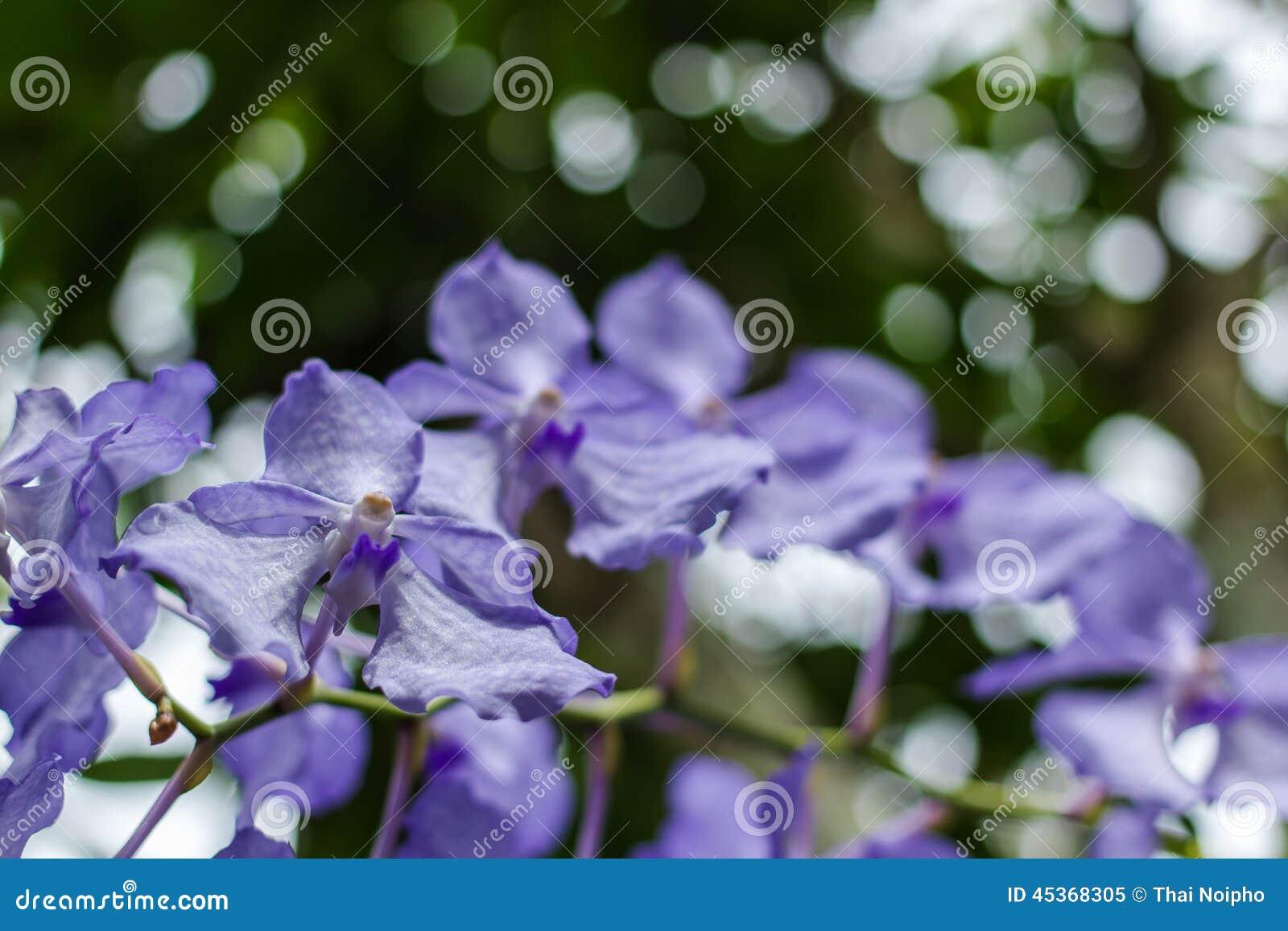 Fleurs pourpres en nature sauvage