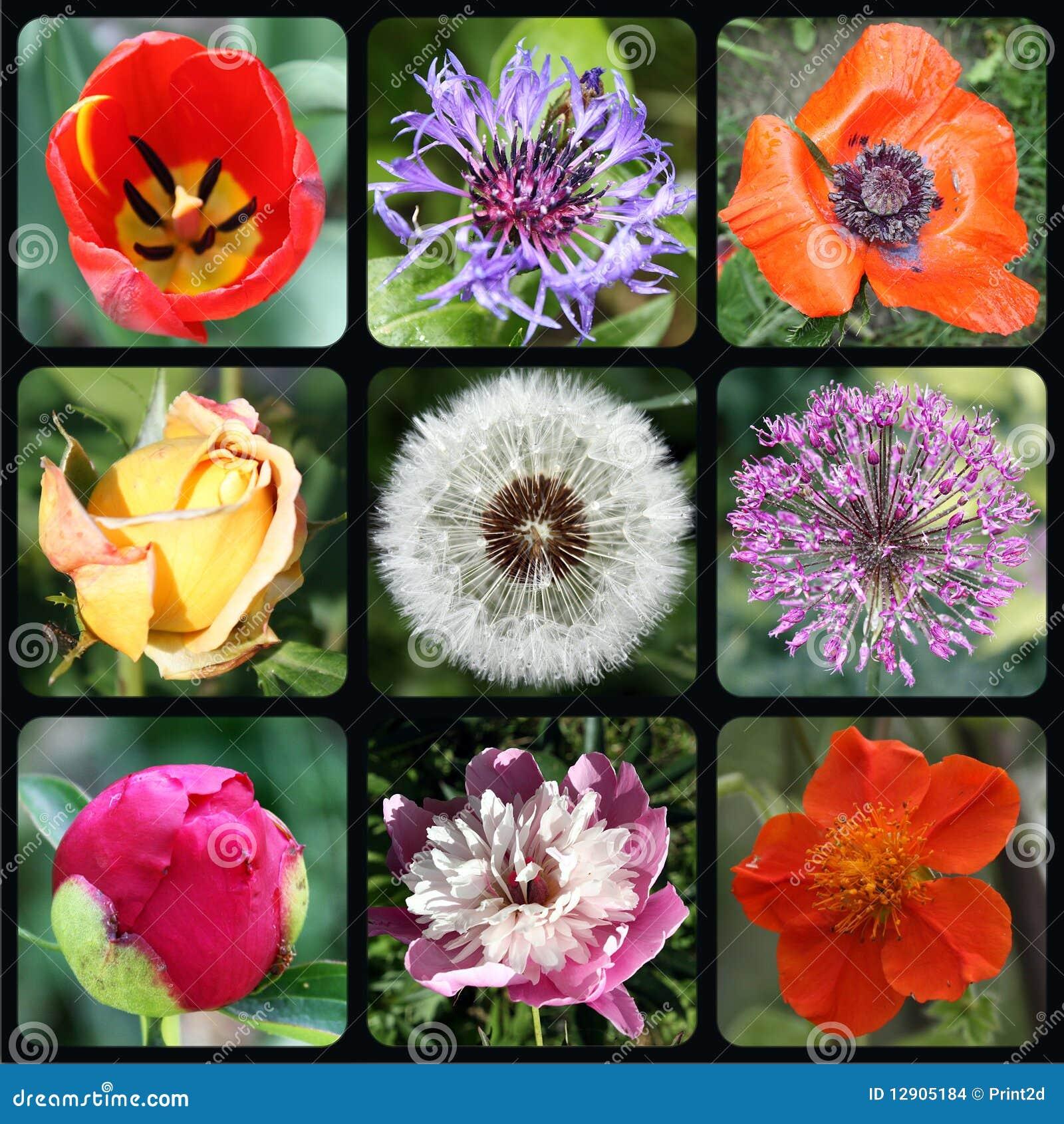 Fleurs rondes