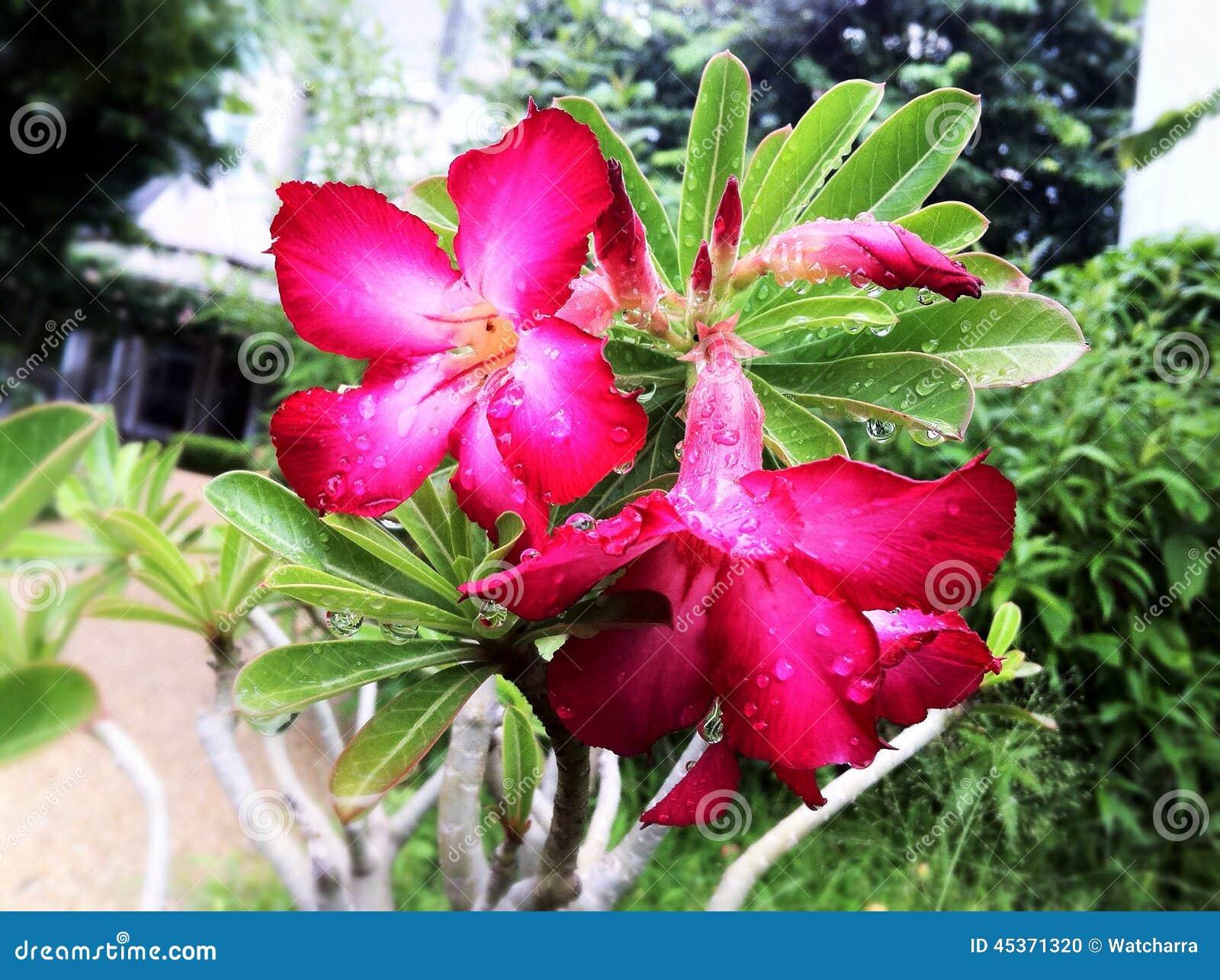 Fleurs roses blanches dans le jardin