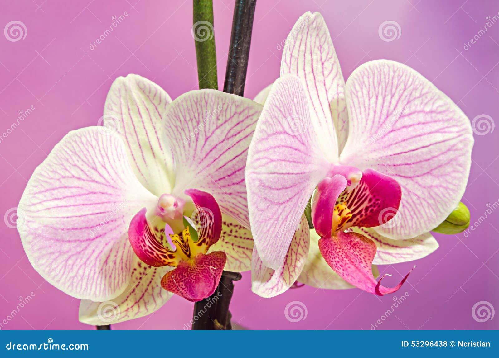 Assez Nom des fleurs avec photos - fleuriste bulldo QI84