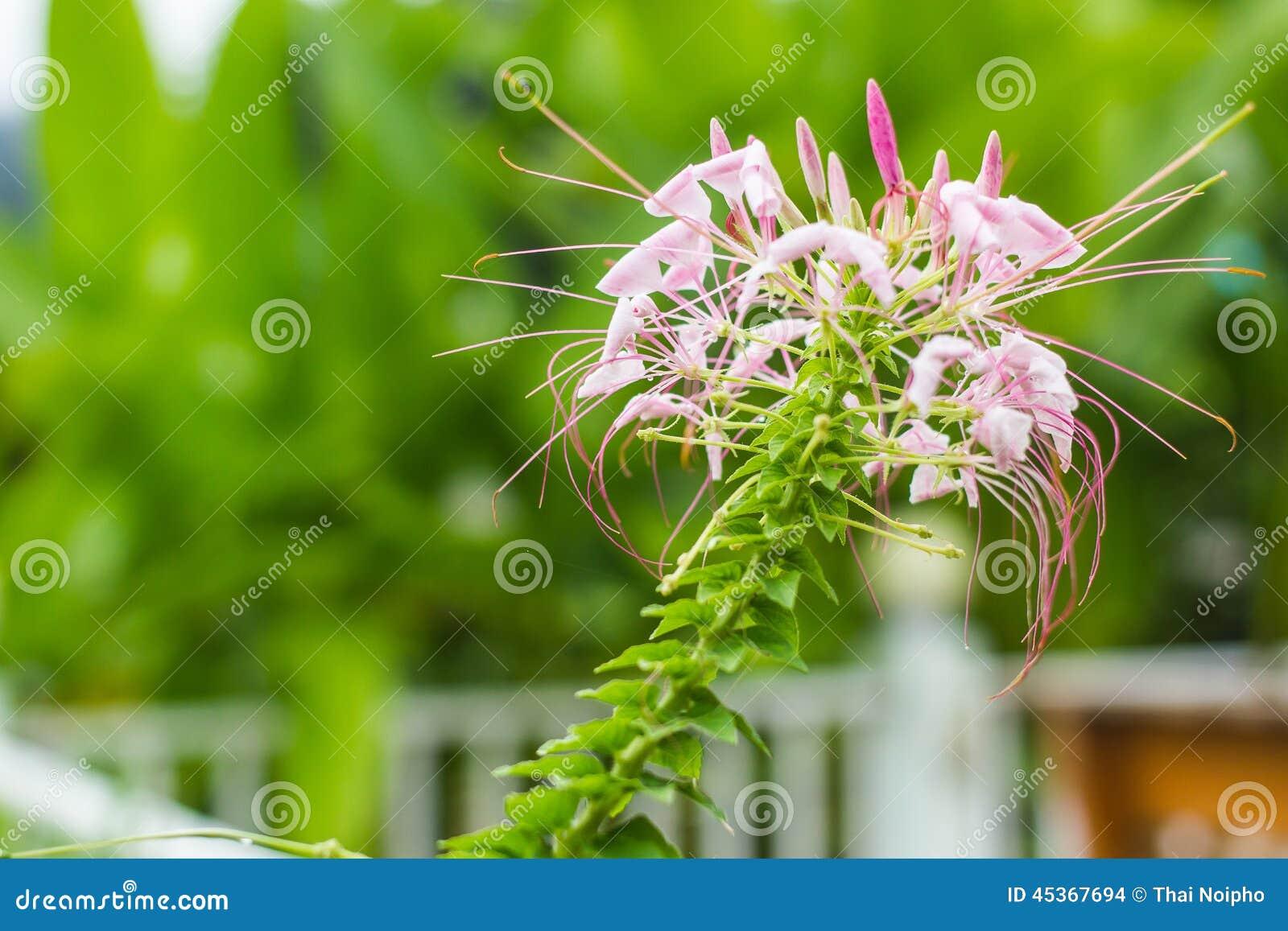Fleurs roses dans le jardin