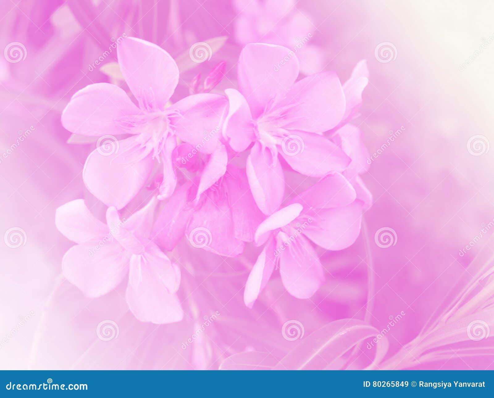 Fleurs Roses Dans Le Jardin Avec Le Ton En Pastel Image stock ...