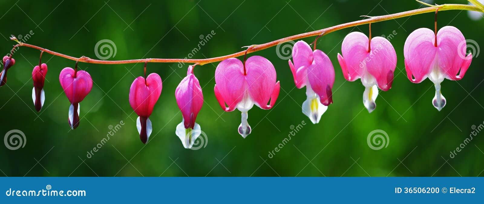 Fleurs roses de coeur