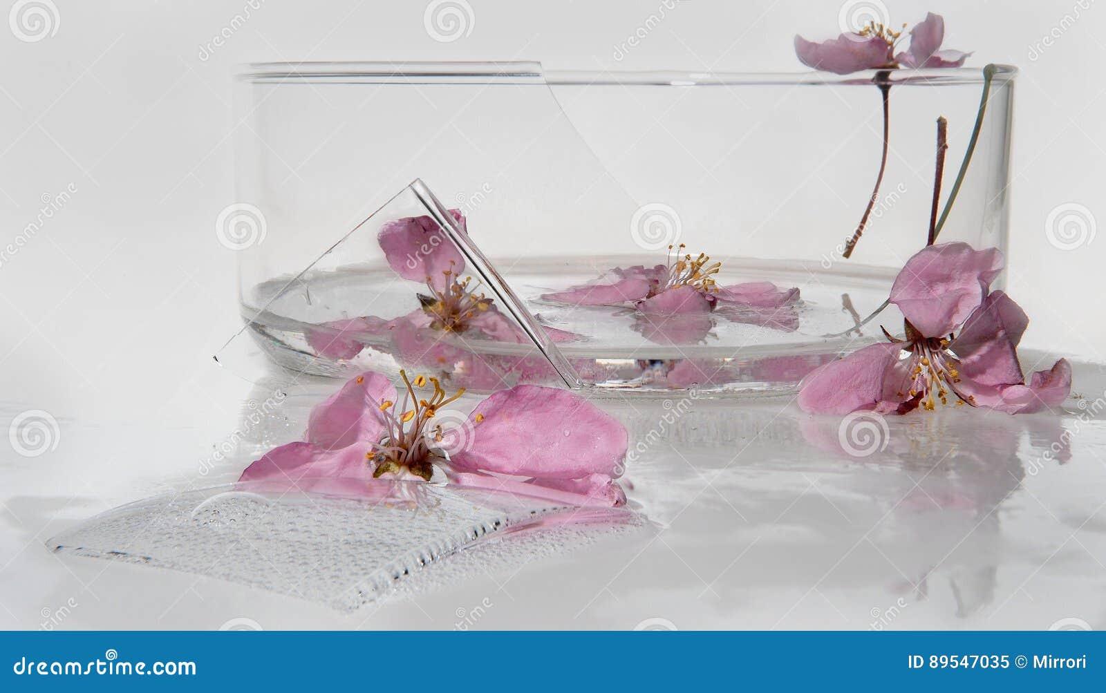 fleurs roses lumineuses du pommier, étamine jaune, plan rapproché