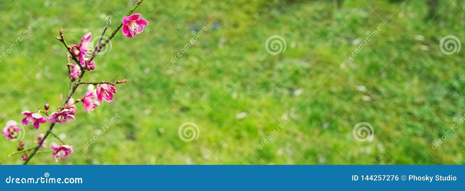 Fleurs roses sur un fond d herbe