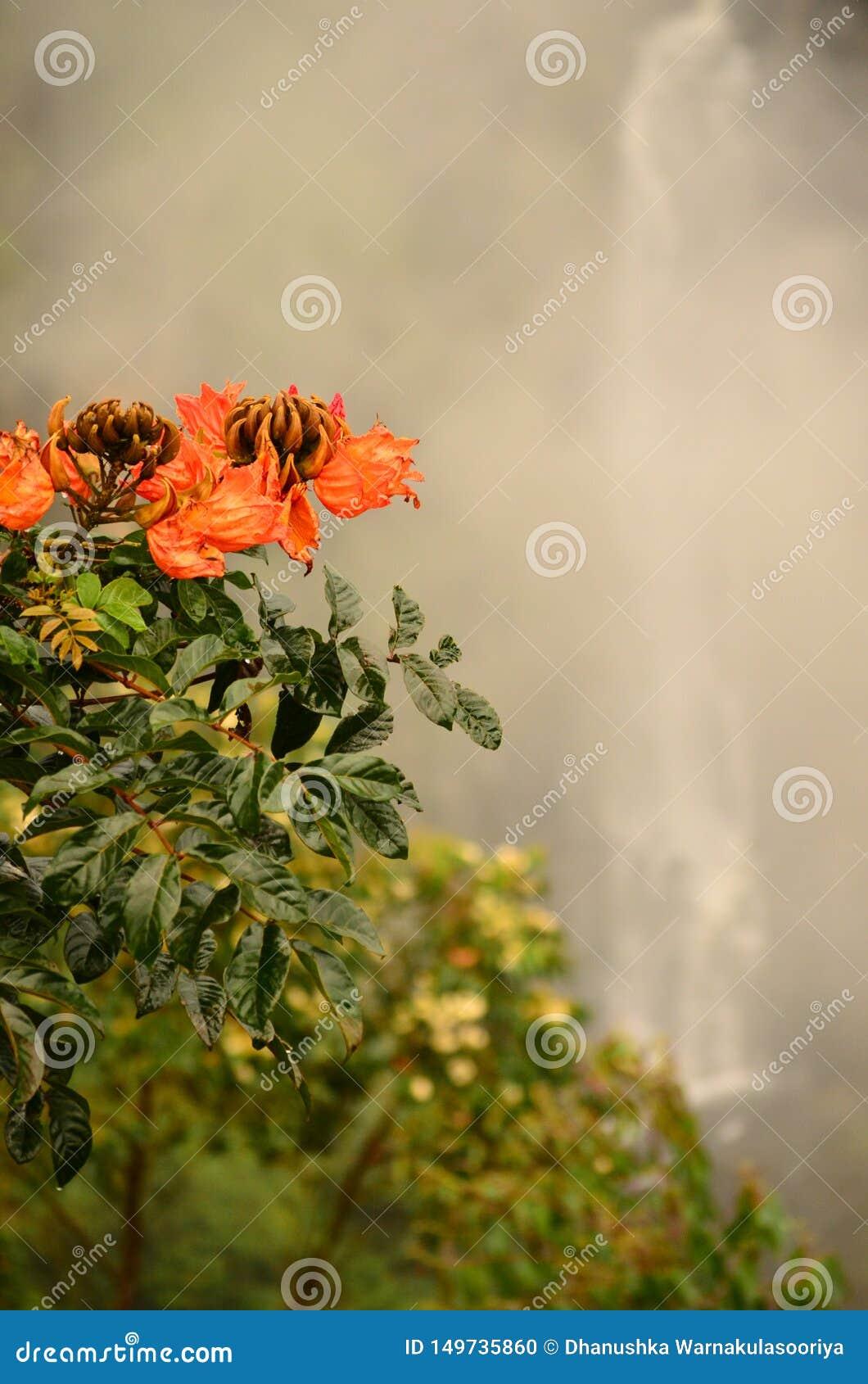 Fleurs rougeâtres près de belle cascade