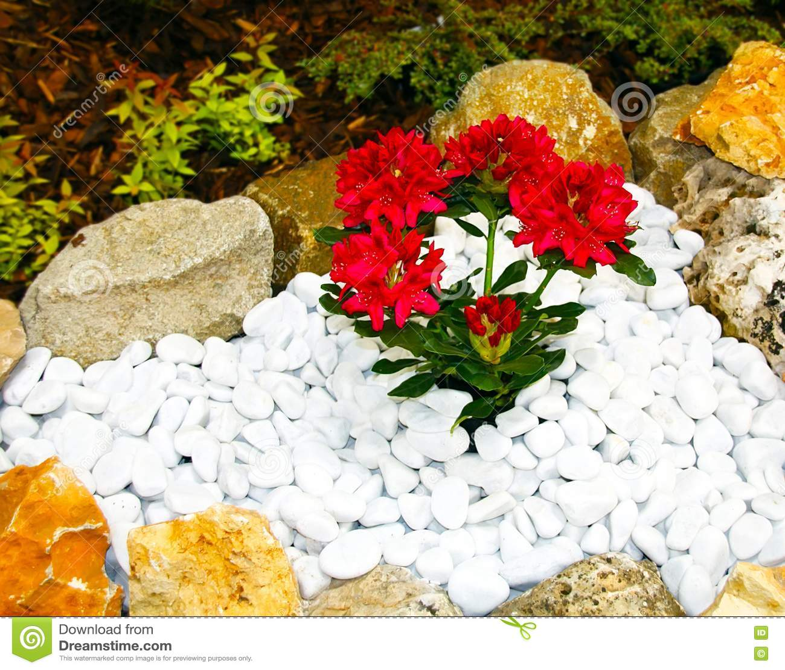 Fleurs rouges dans un jardin de rocaille photos libres de for Fleurs dans un jardin