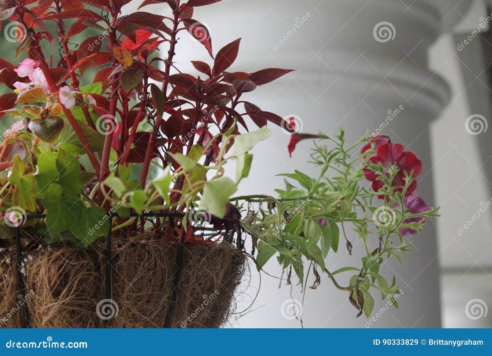 Plantes vertes fleurs rouges - Plante verte avec fleur blanche ...