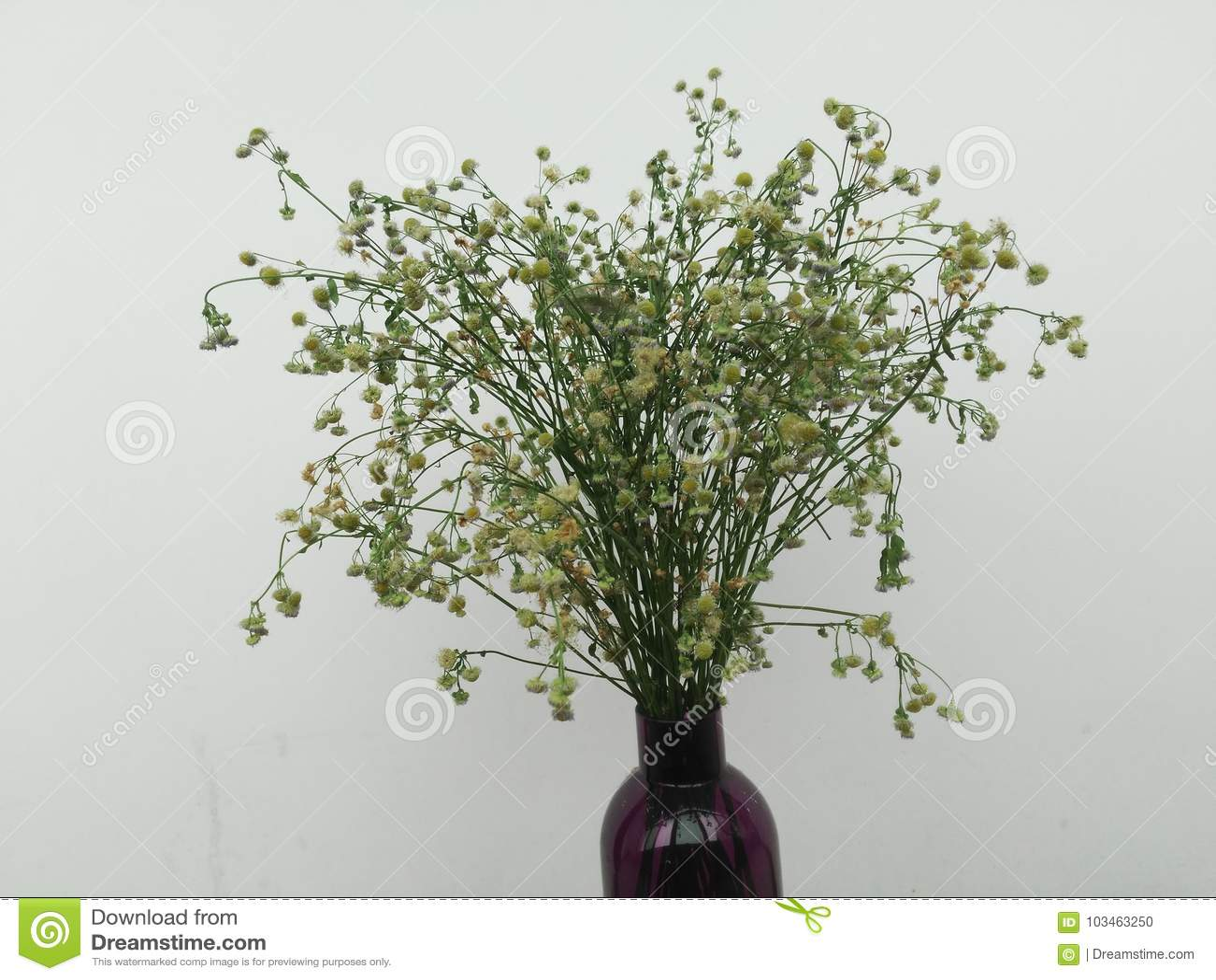 Fleurs sèches dans une bouteille