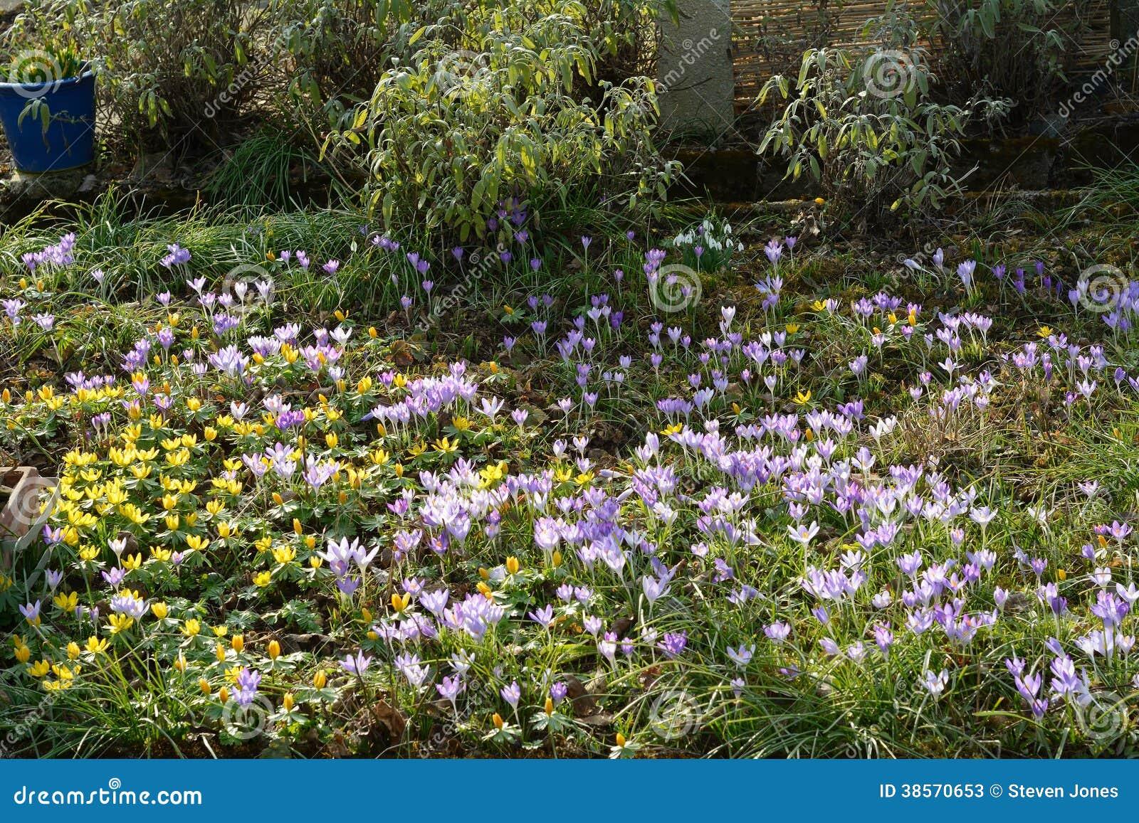 fleurs sauvages au printemps image stock image du sensible flore 38570653. Black Bedroom Furniture Sets. Home Design Ideas