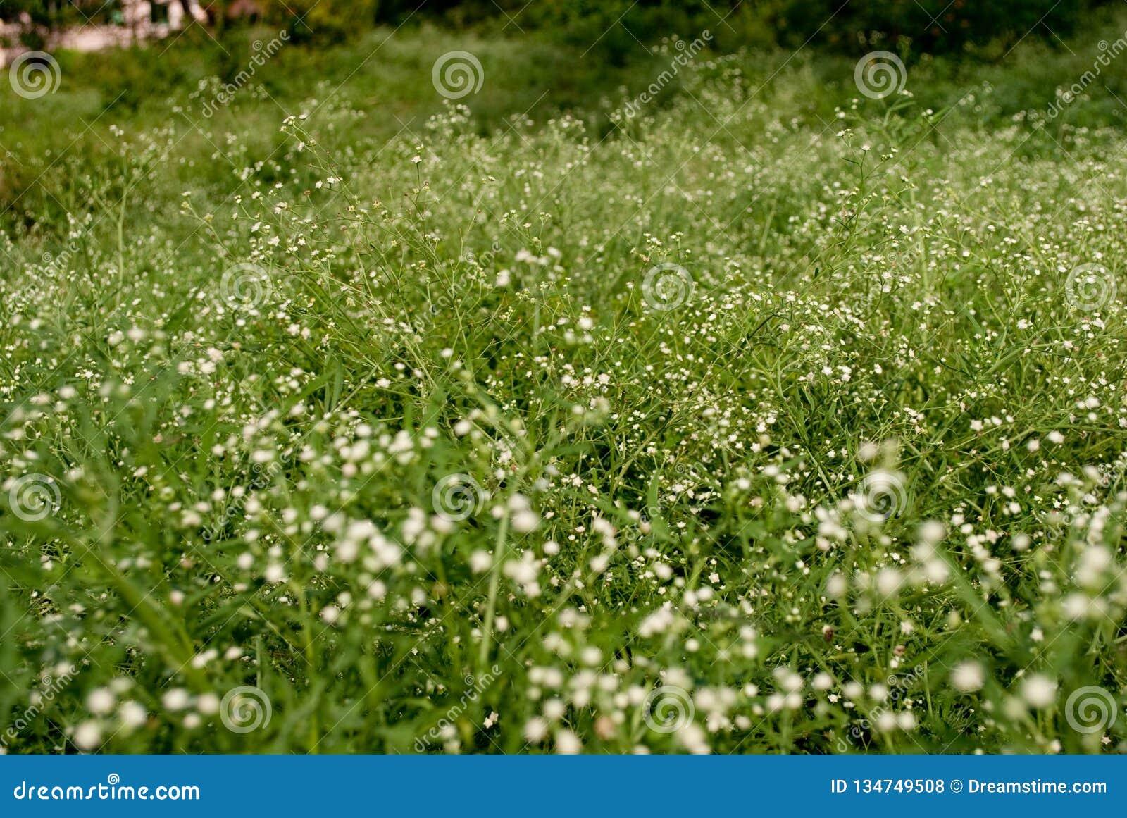 Fleurs sauvages dans la steppe