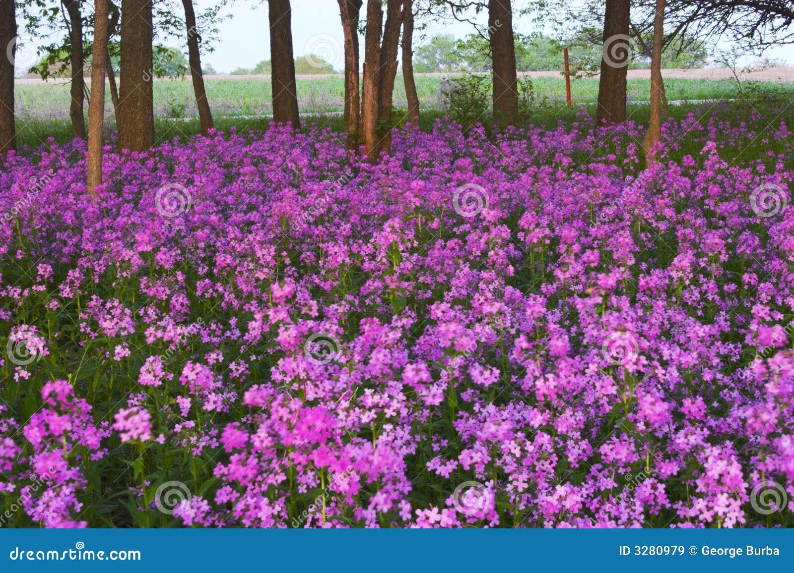 fleurs sauvages et forêt roses images libres de droits - image