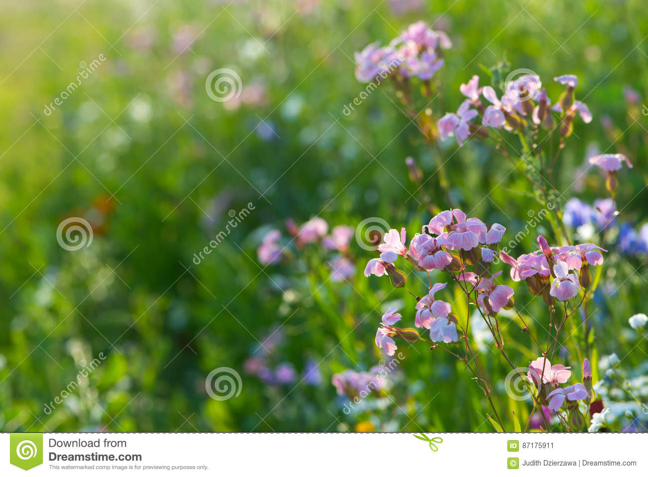 fleurs sauvages roses photo stock - image: 87175911
