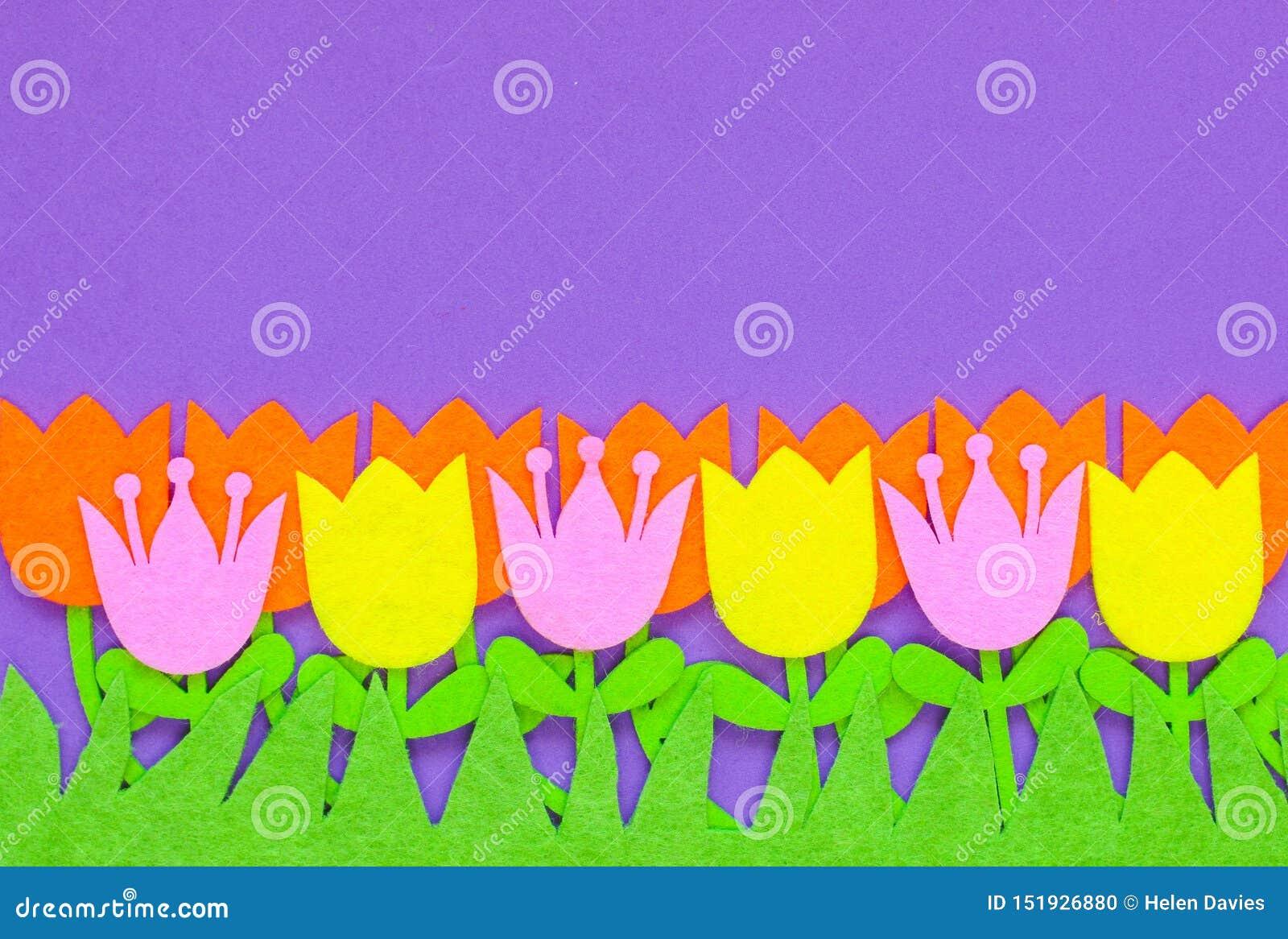 Fleurs senties brillamment colorées de tulipe sur un fond simple