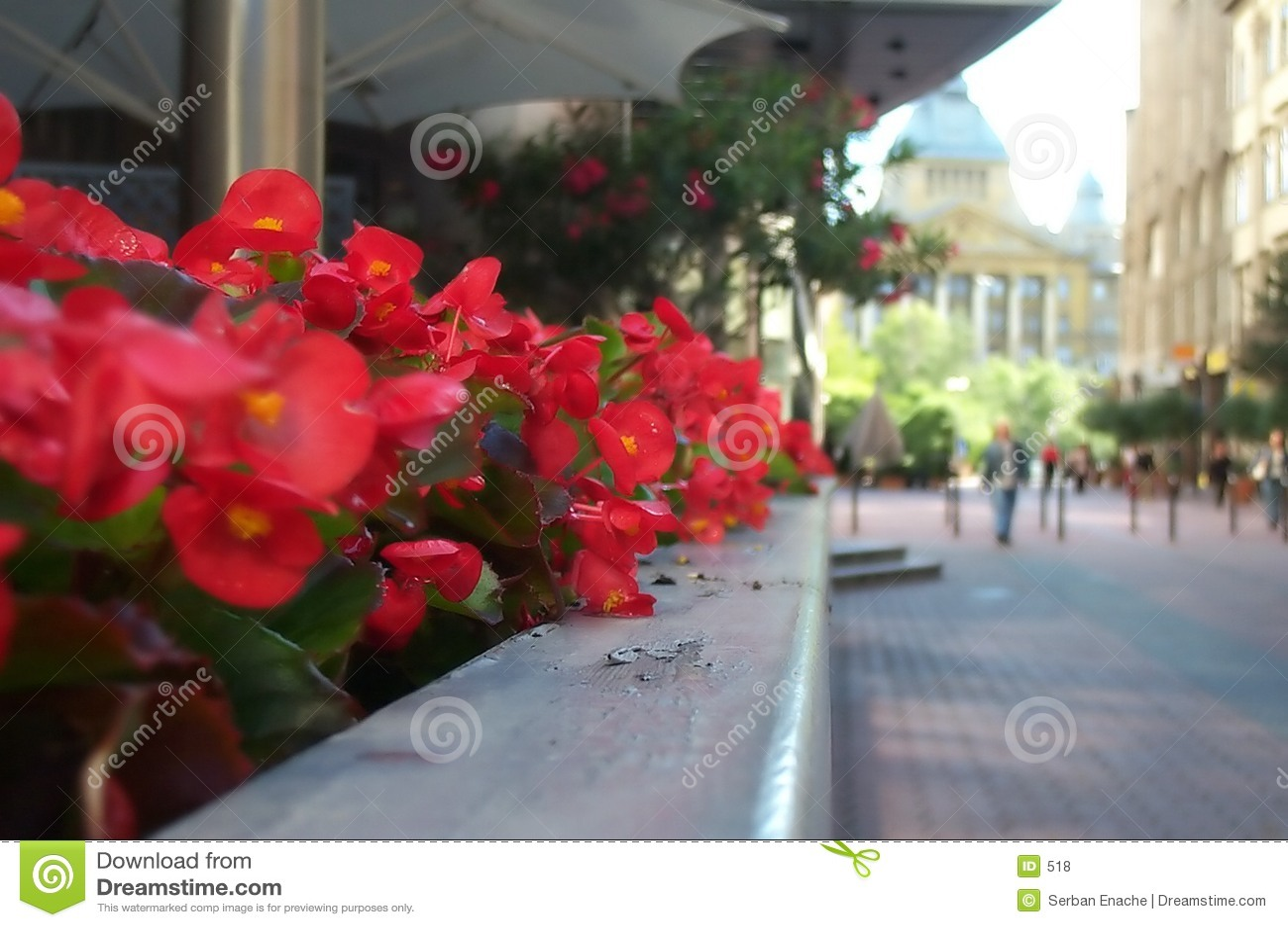 Fleurs sur la rue d affaires
