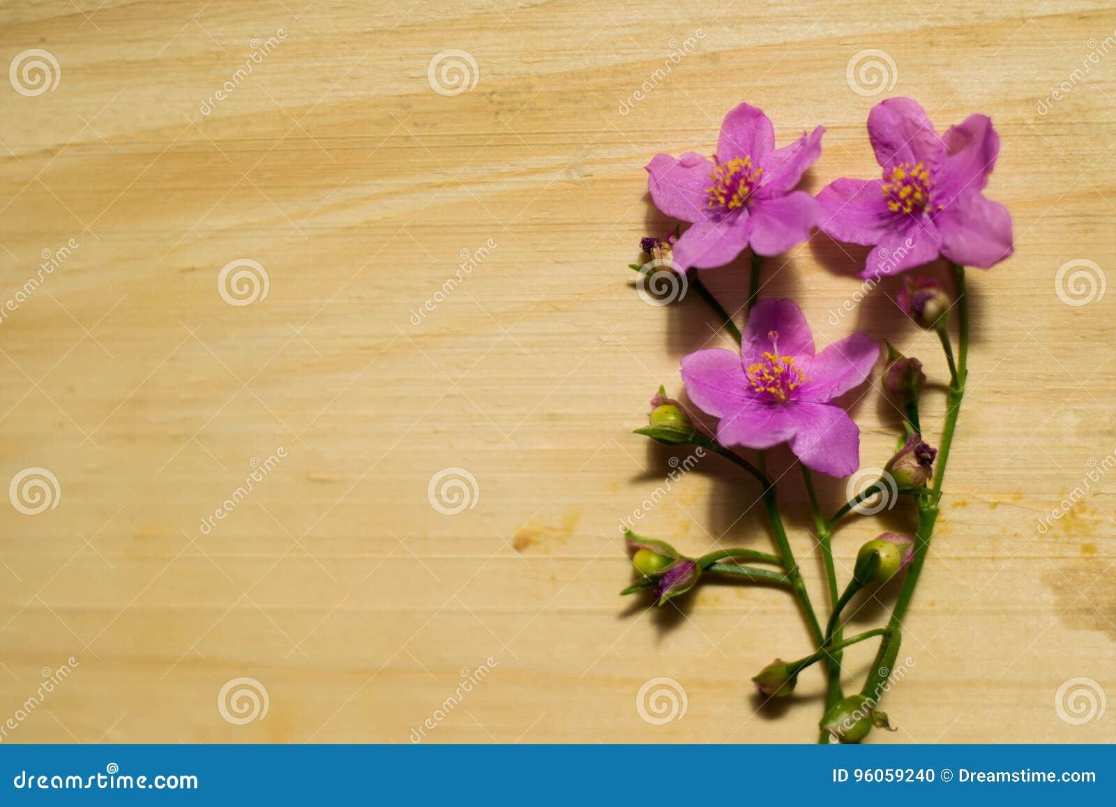 Fleurs sur le bois