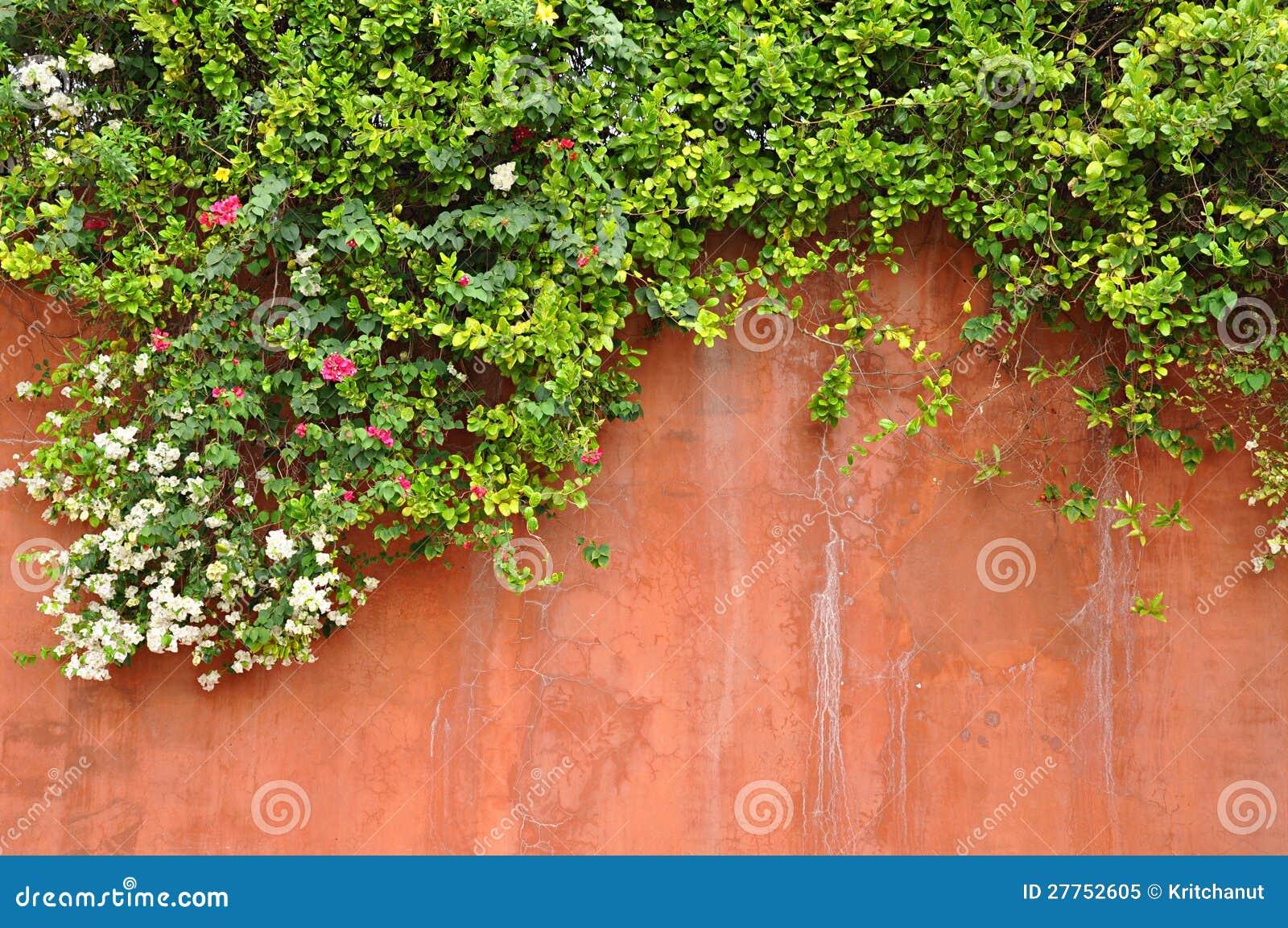 Fleurs sur le mur