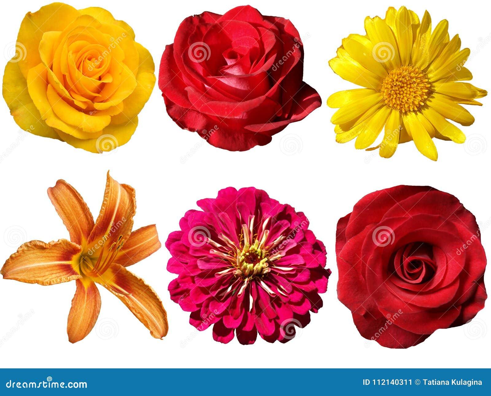 Fleurs Sur Un Fond Transparent Image stock , Image du fond