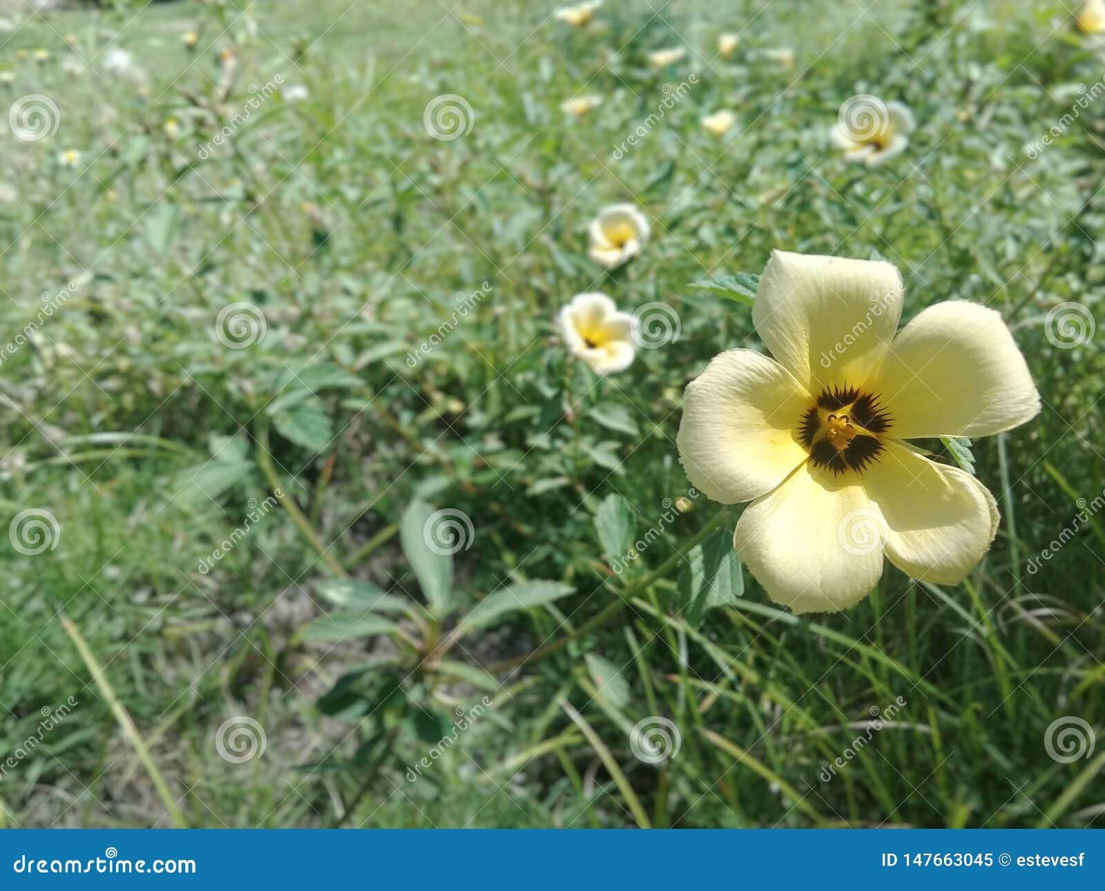 Fleurs tropicales jaunes dans le jardin