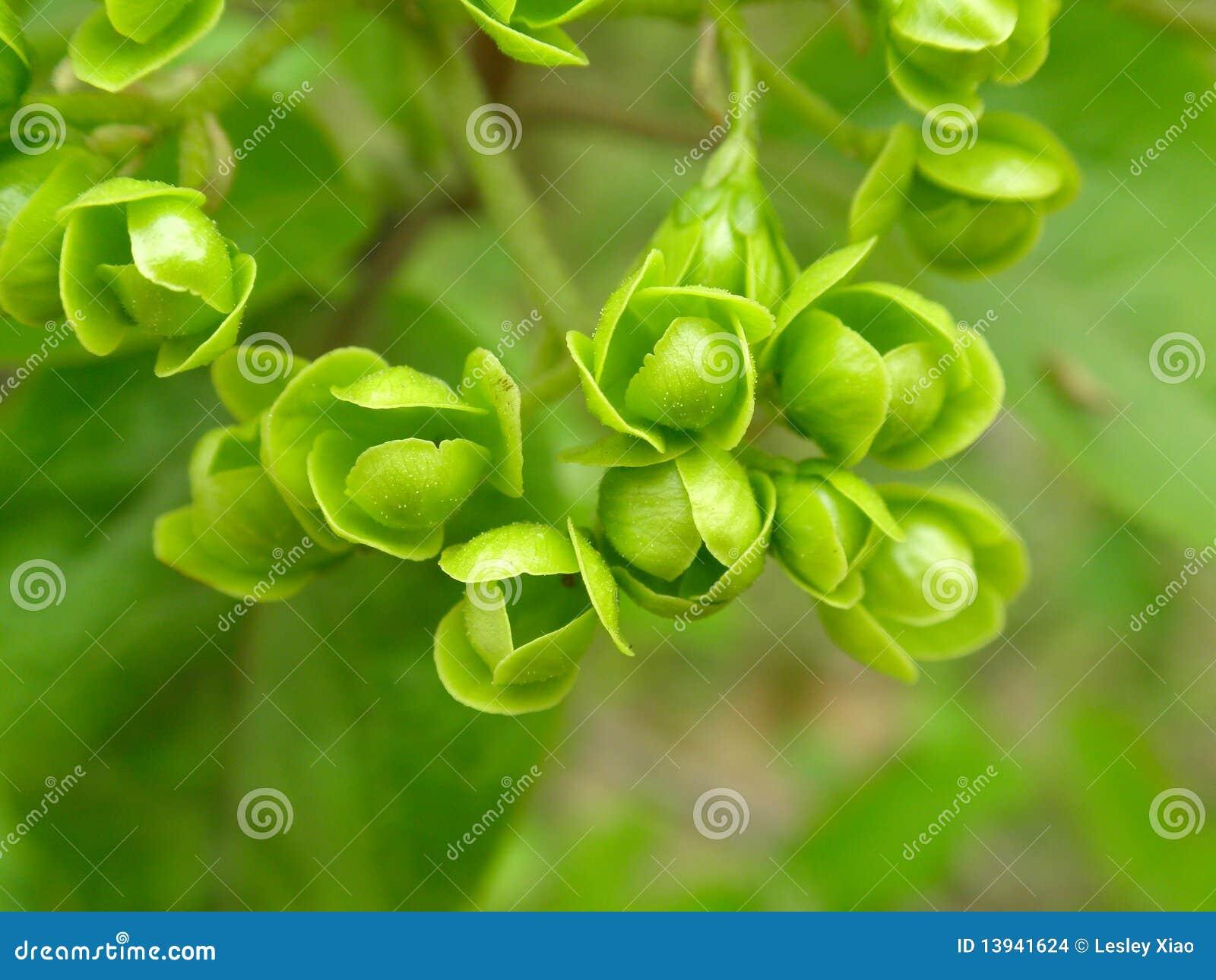 Fleurs vertes images stock image 13941624 for Bouquet de fleurs vertes