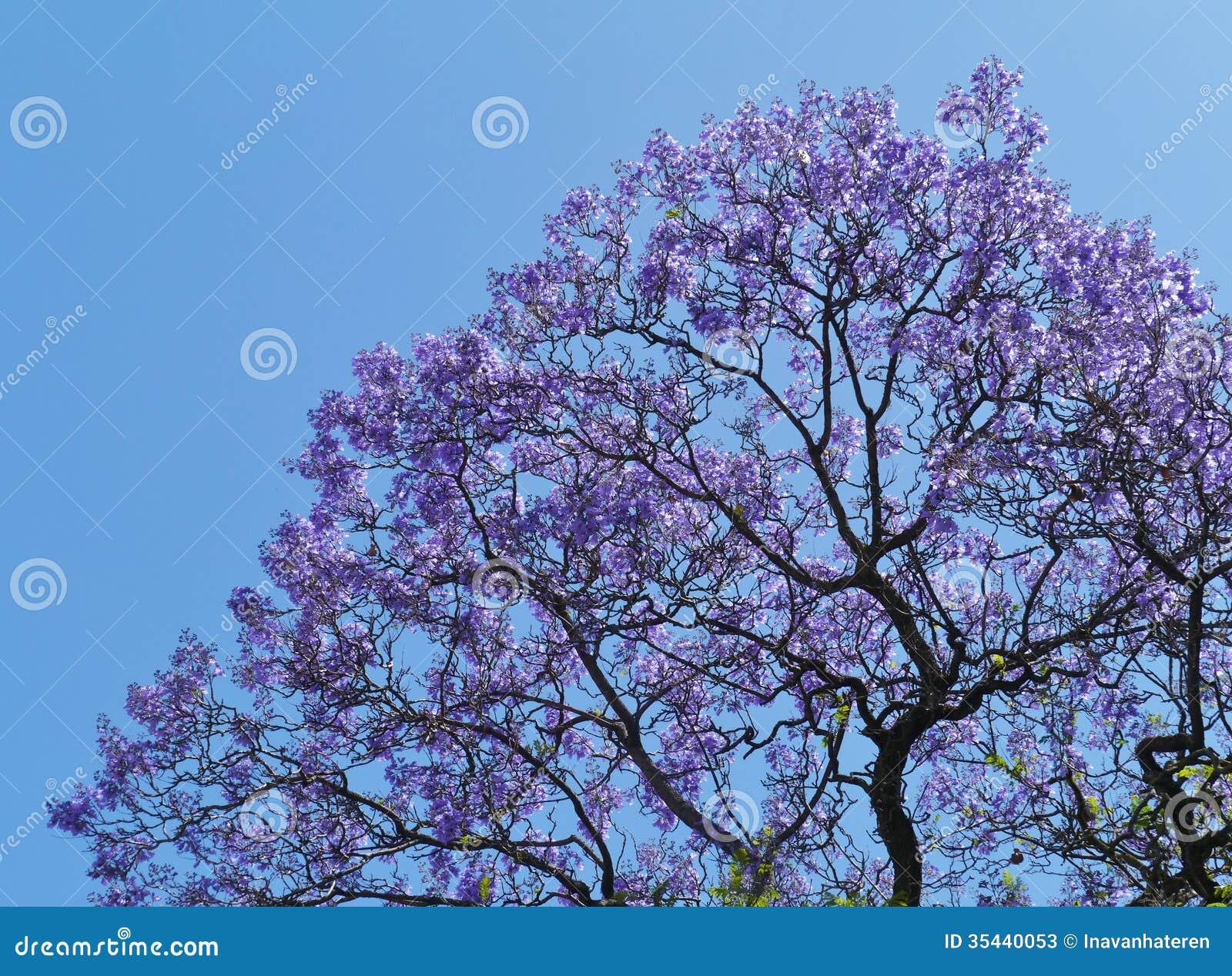Fleurs Violettes Dans Un Arbre Photos stock - Image: 35440053