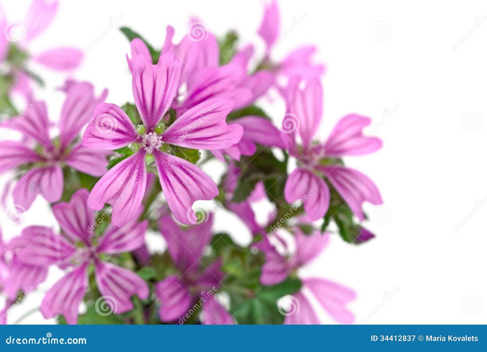 Fleurs violettes sauvages image stock. Image du bouquet - 34412837