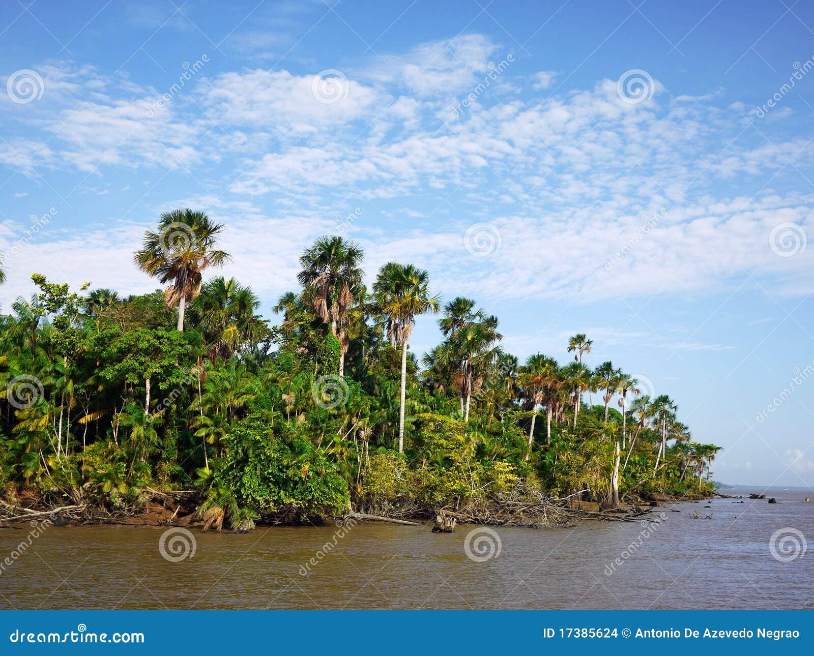 Fleuve d Amazone