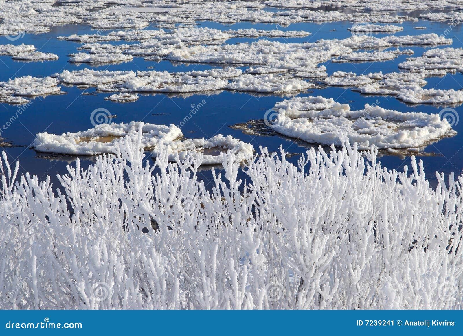 Fleuve de gelée