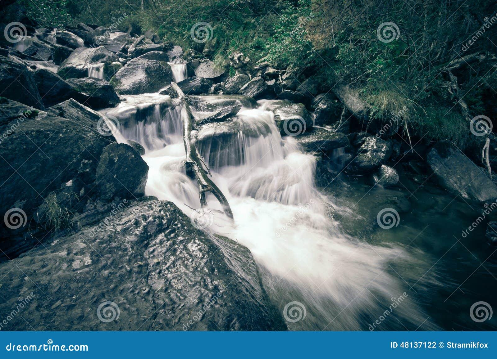Fleuve profondément dans la forêt de montagne