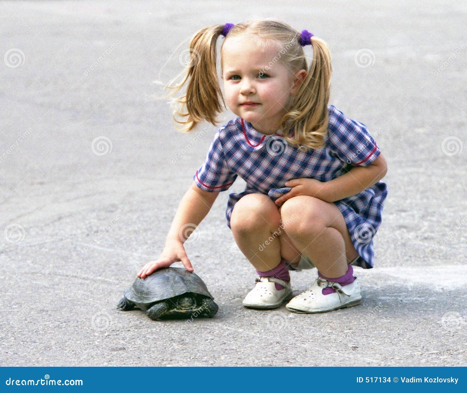 Flickasköldpadda