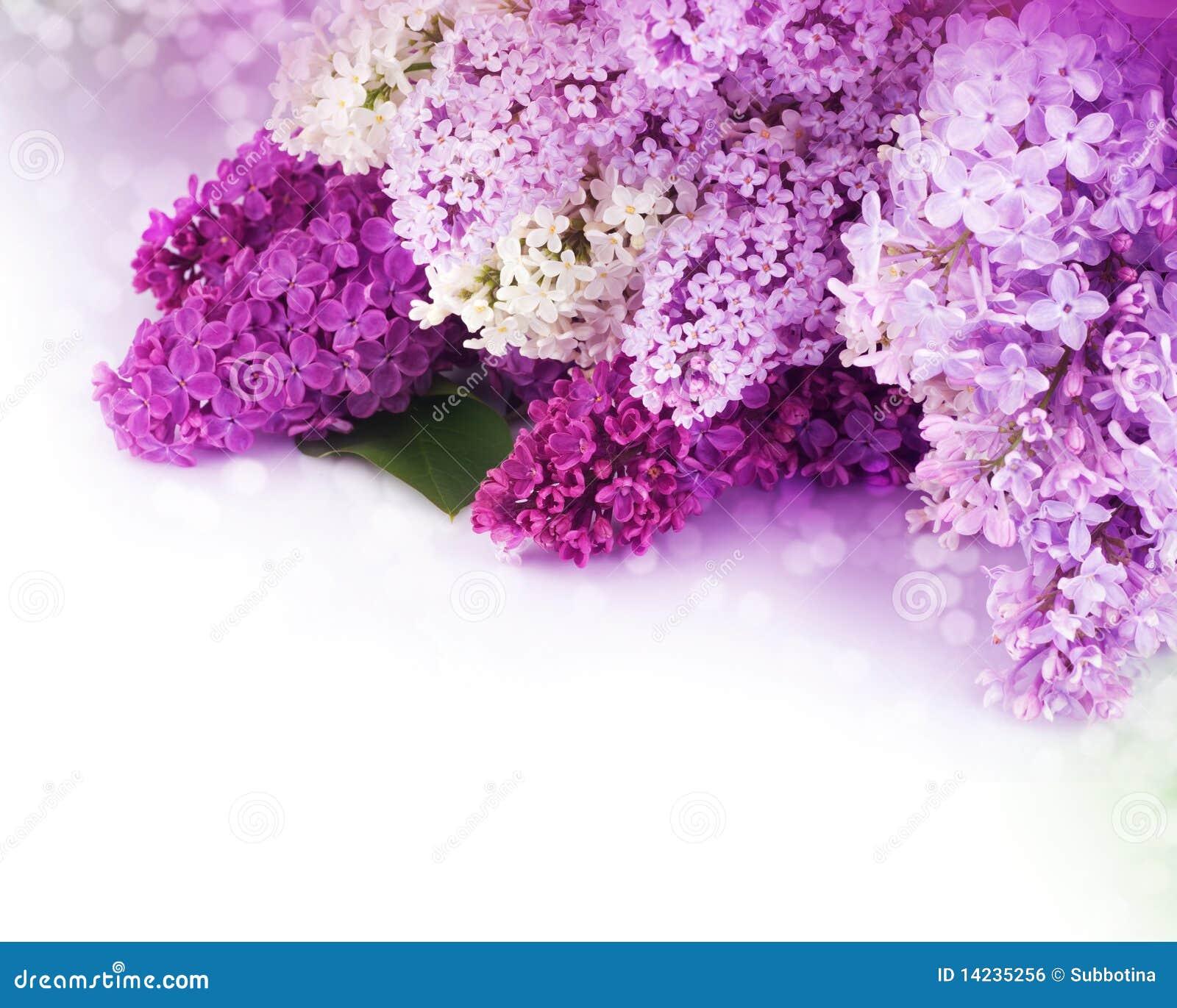 Flieder blüht Blumenstrauß
