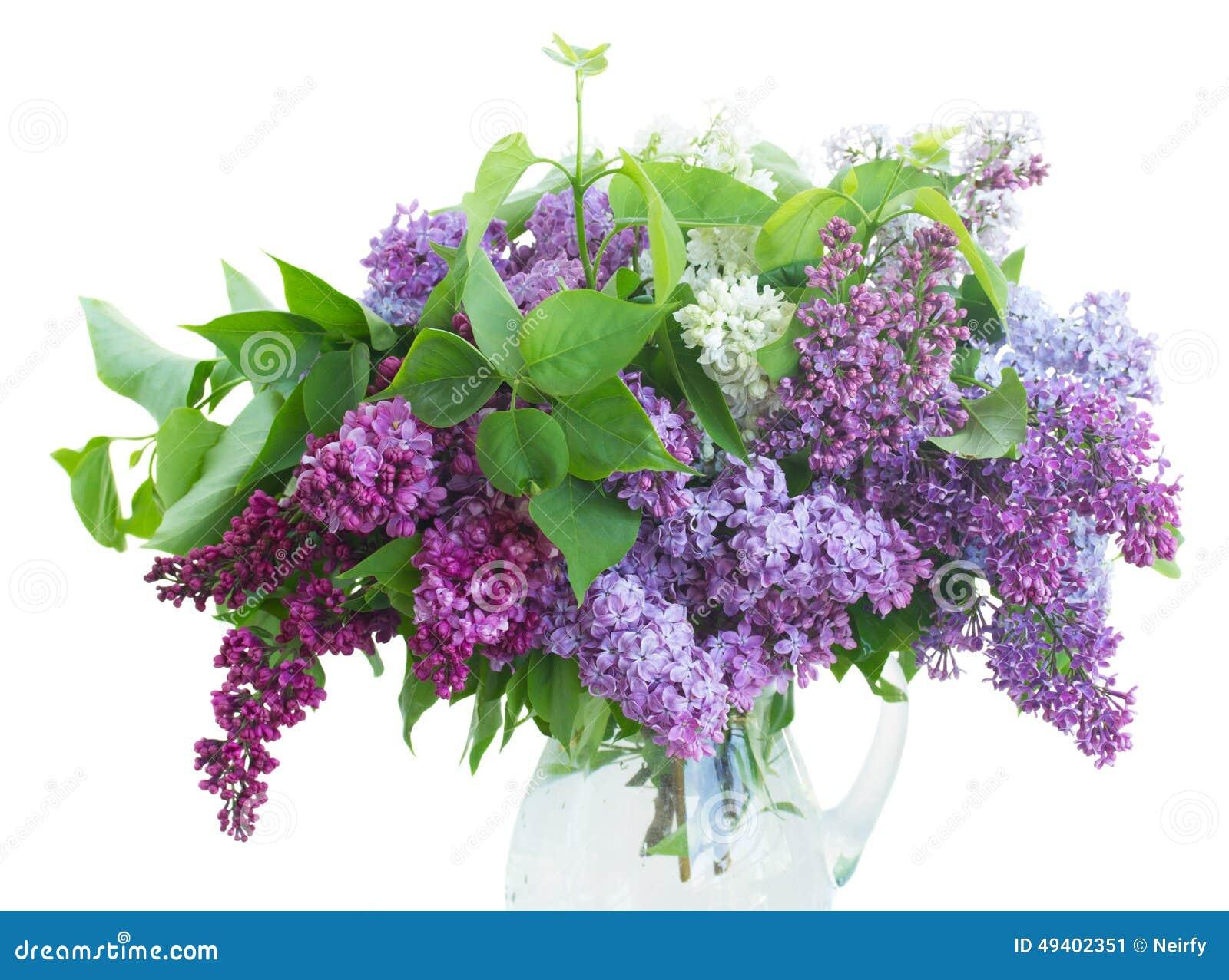 Download Flieder im Vase stockbild. Bild von sonderkommandos, hell - 49402351