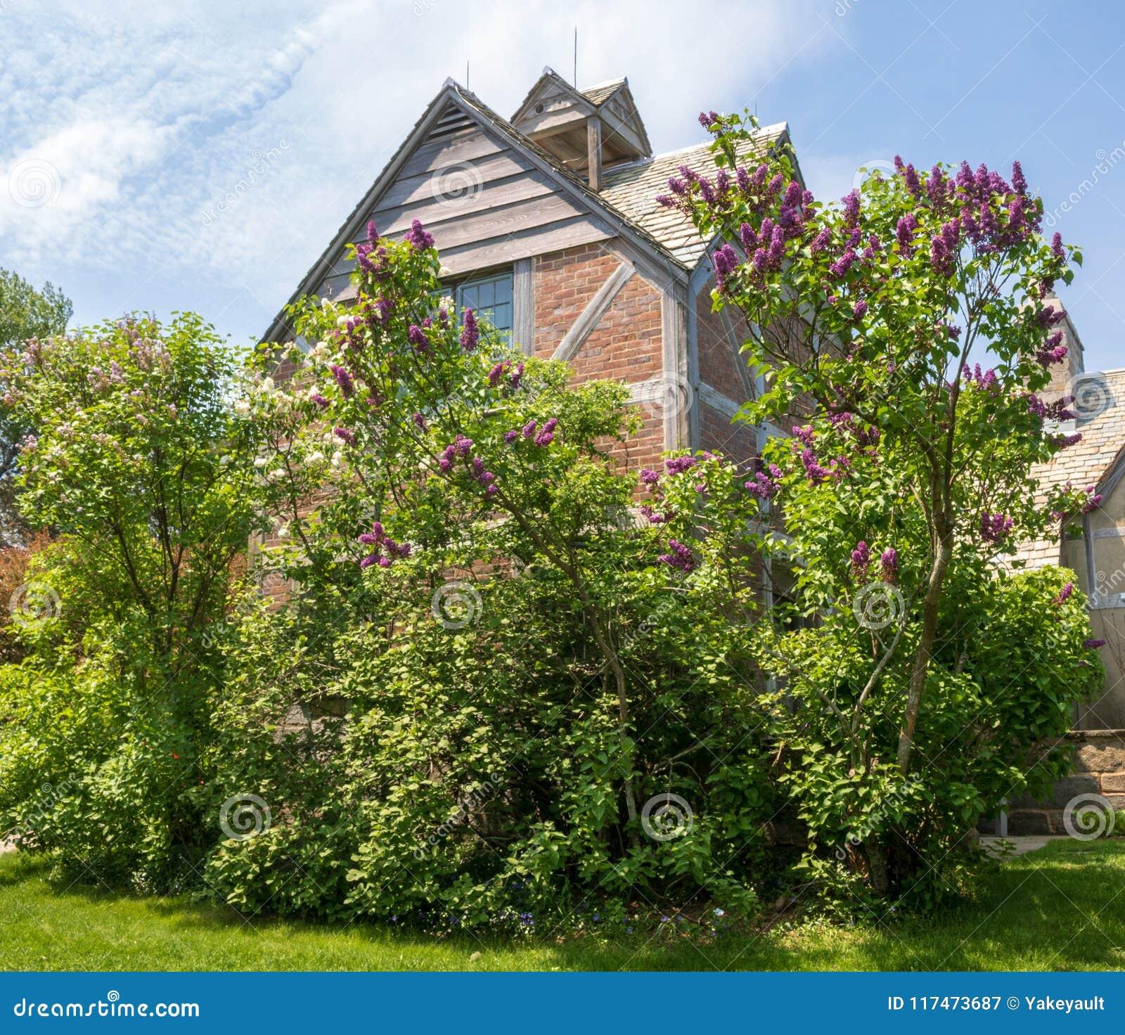 Fliederbüsche gestalten eine Tudor Revival-Artstruktur aufgrund des Topsmead-Nationalparks