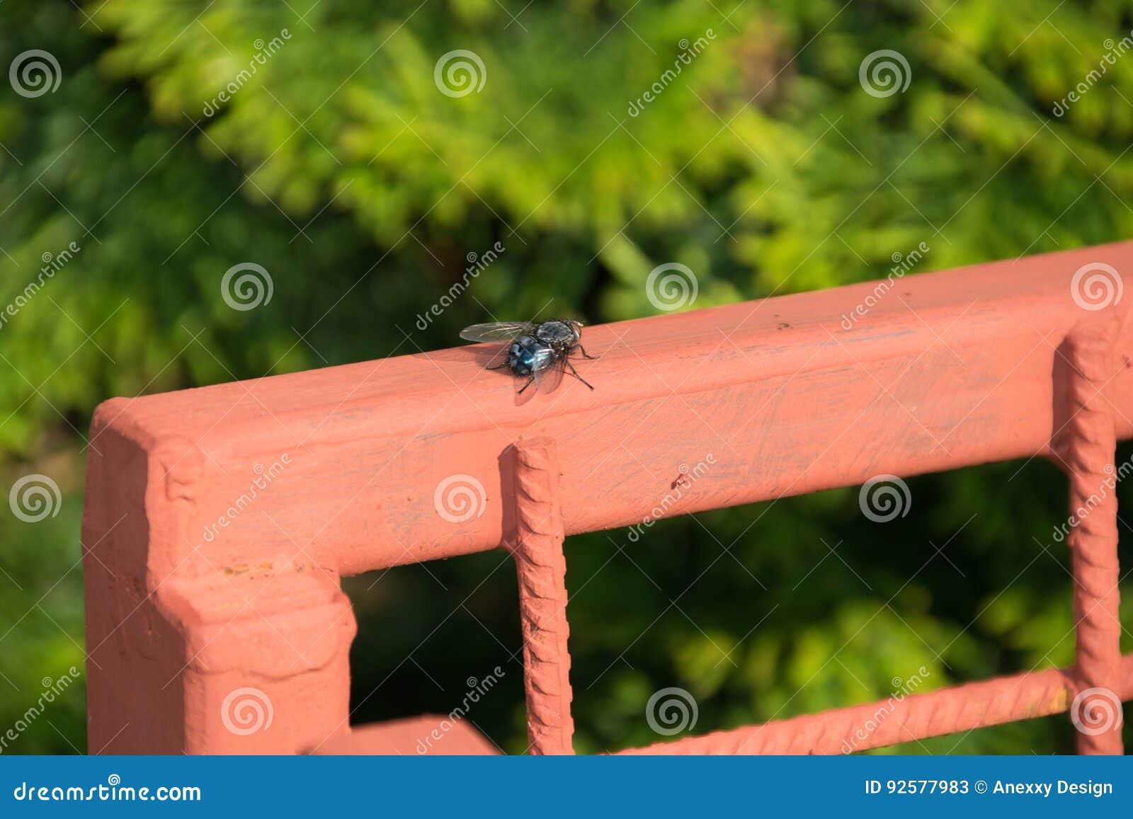 Fliege auf dem Zaun