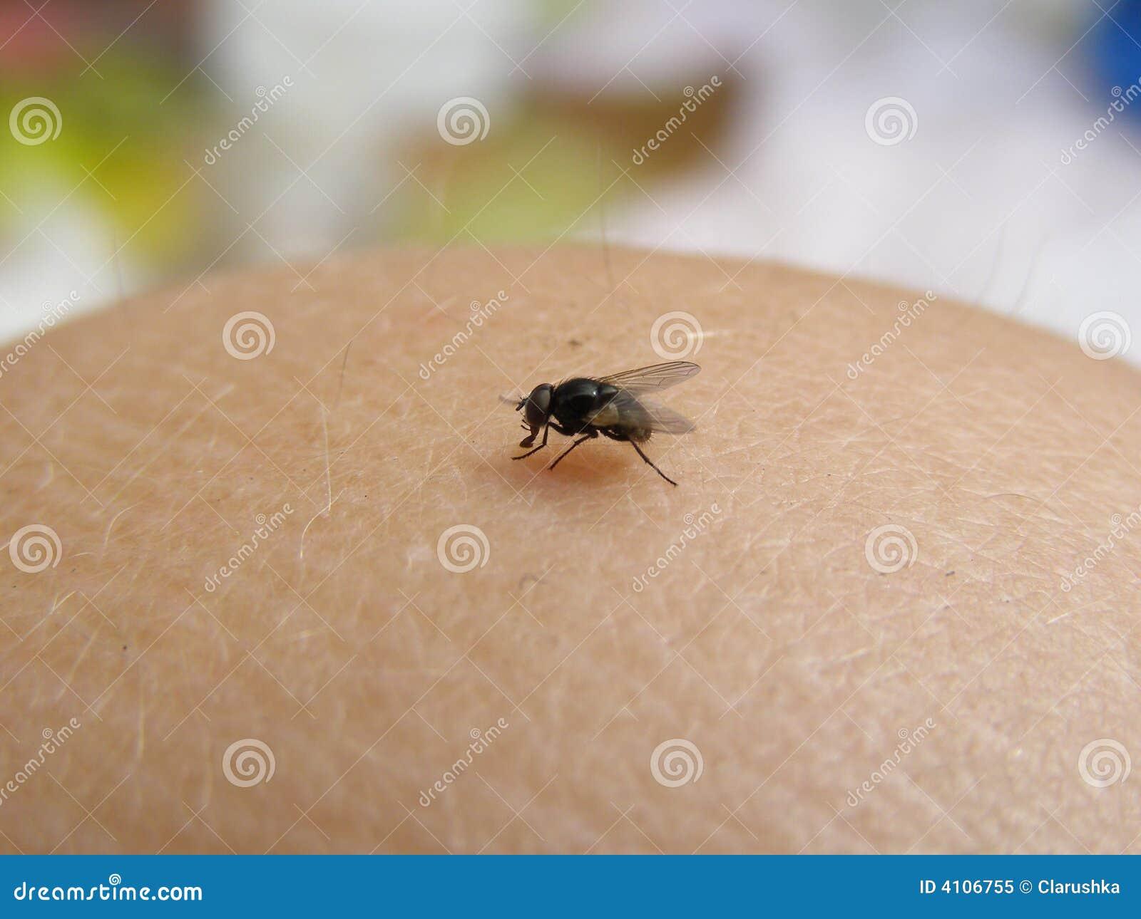 Fliege in der Haut