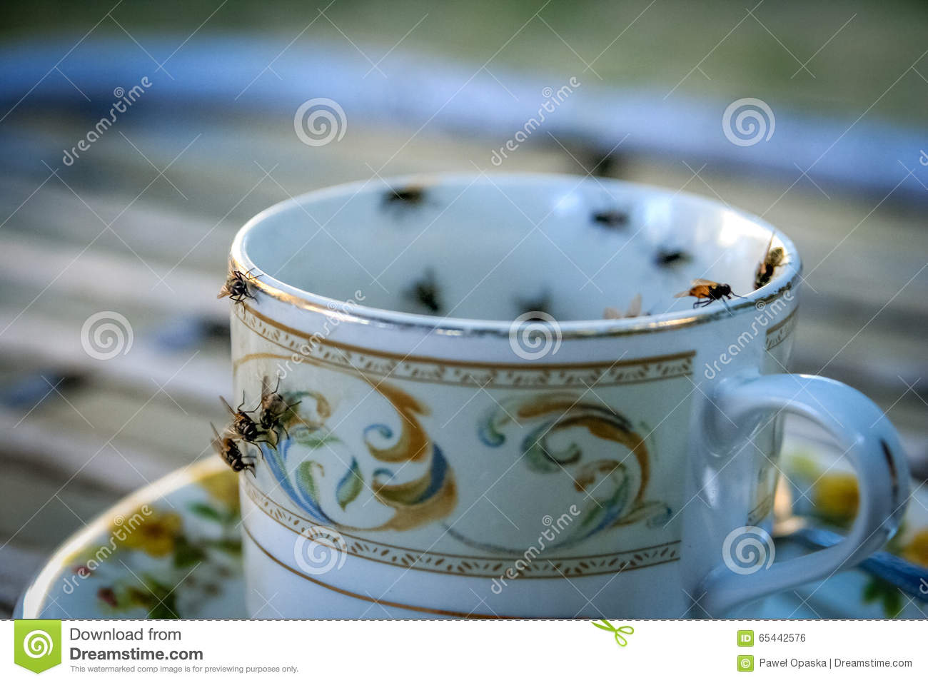 Flies on the cup