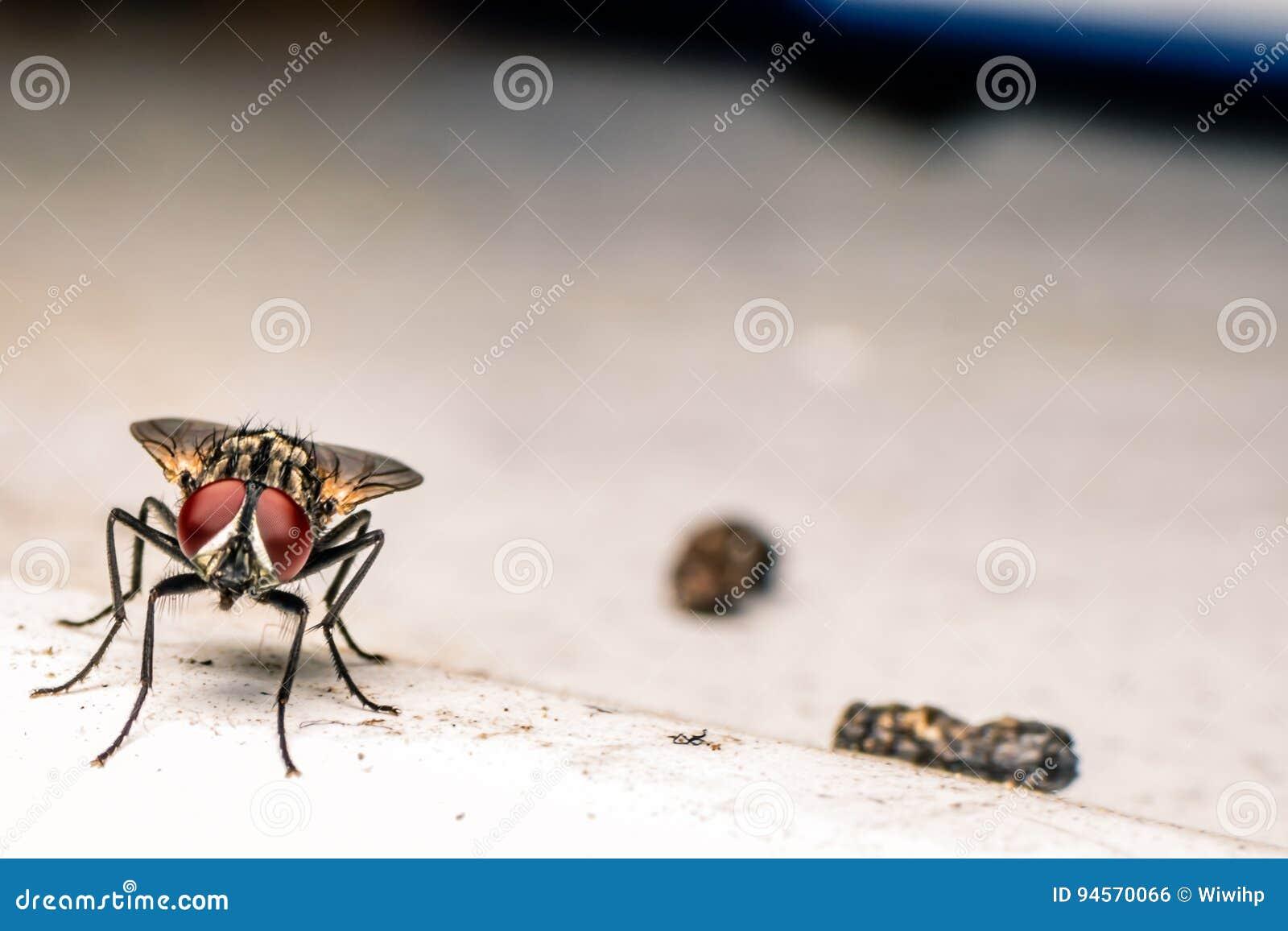 Flies and Debris