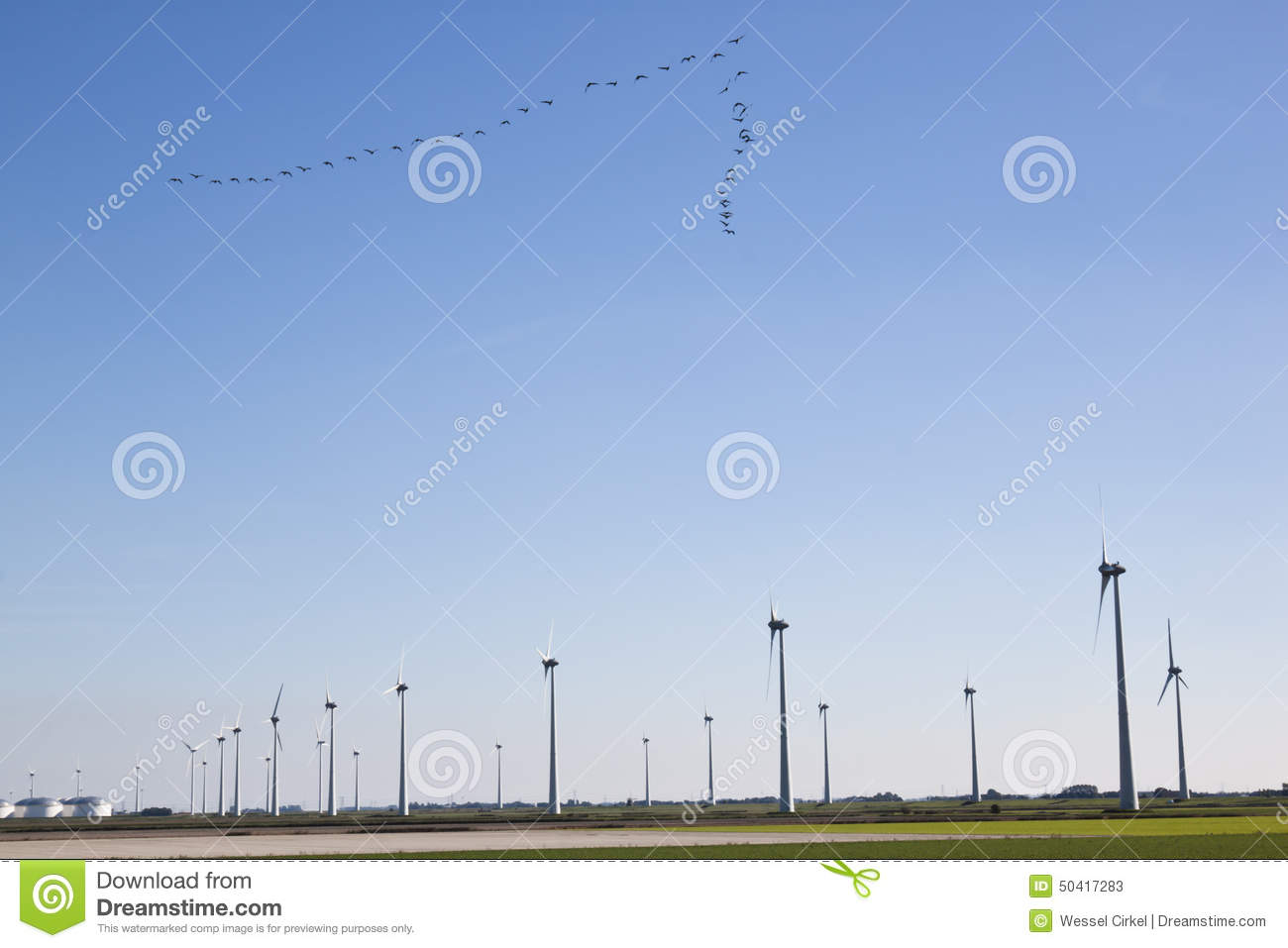 Flight of geese and windmills in dutch landscape