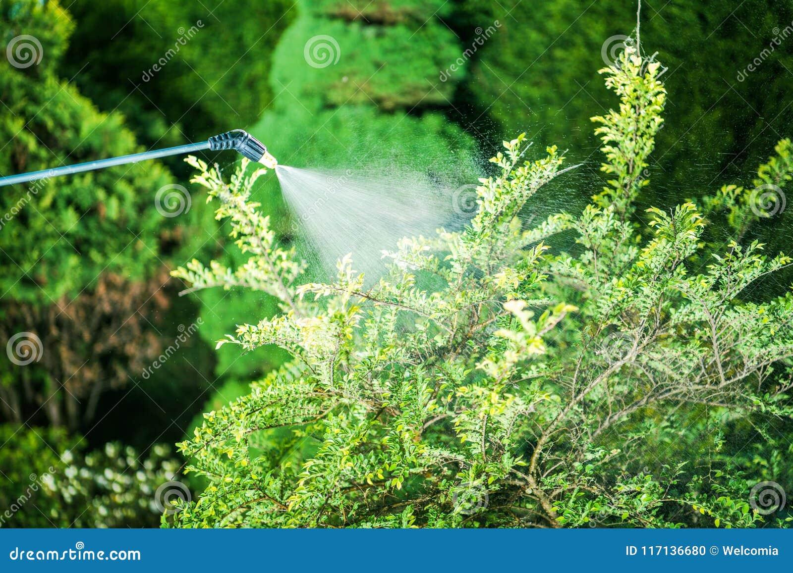 Flit w ogródzie