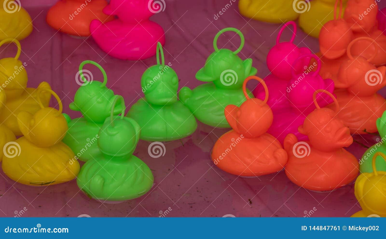 Floating plastic ducks