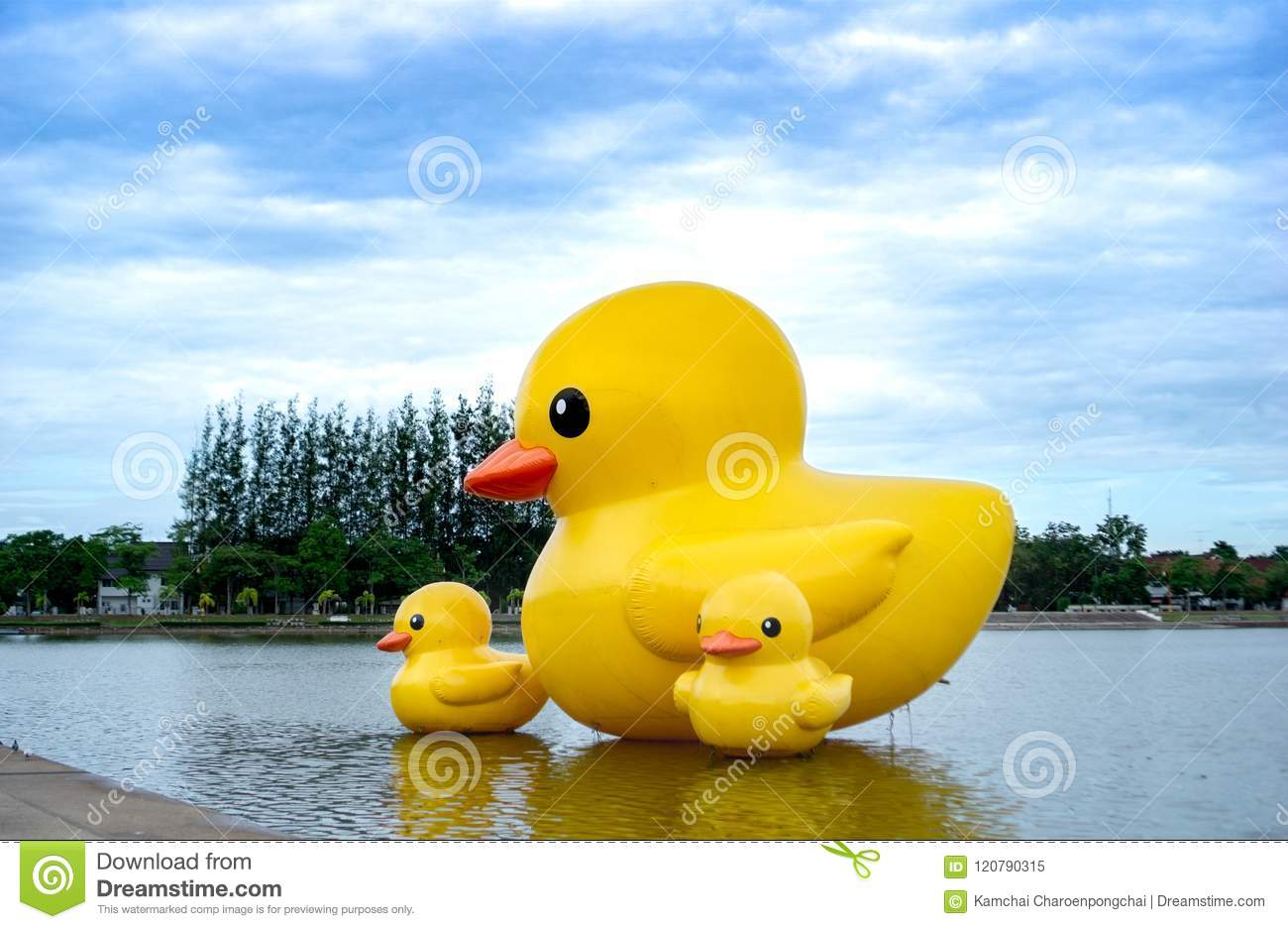 The Floating Yellow Rubber Ducks Balloon Float On The Nong Prachak ...