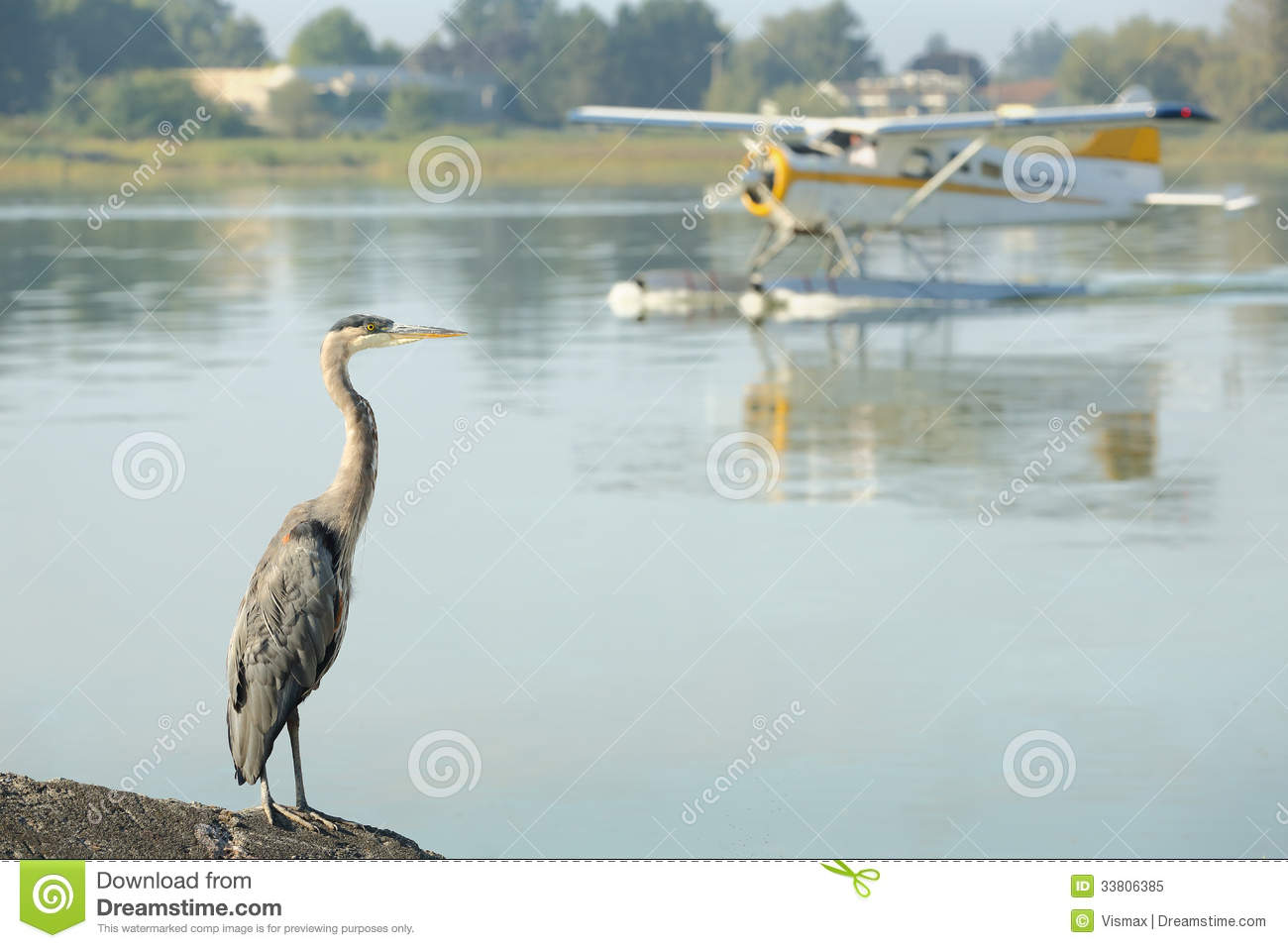 Floatplane And Heron Yvr Richmond Bc Royalty Free Stock Photo Image 33806385