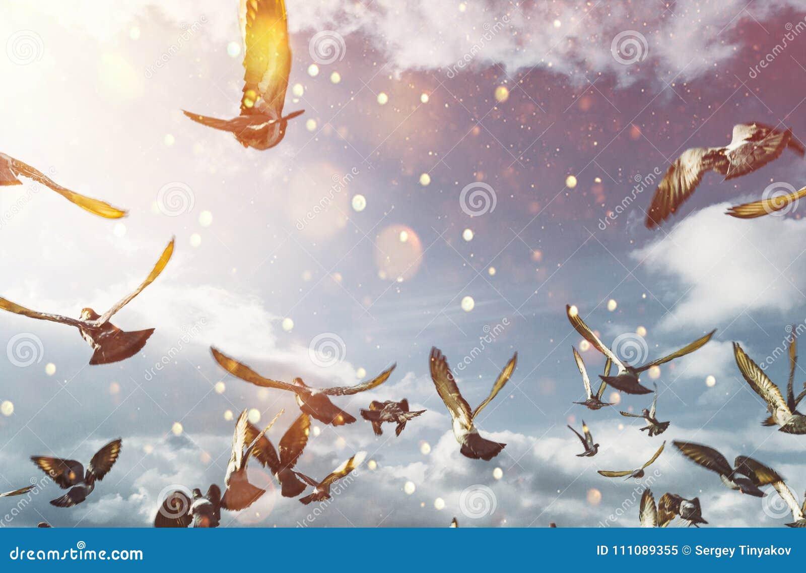 Flock av duvor som flyger i blåa Sunny Sky Frihetsfredbegrepp