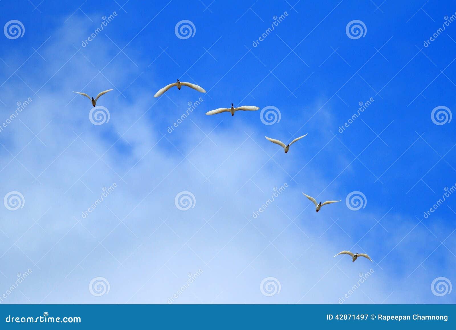 Flock av fåglar