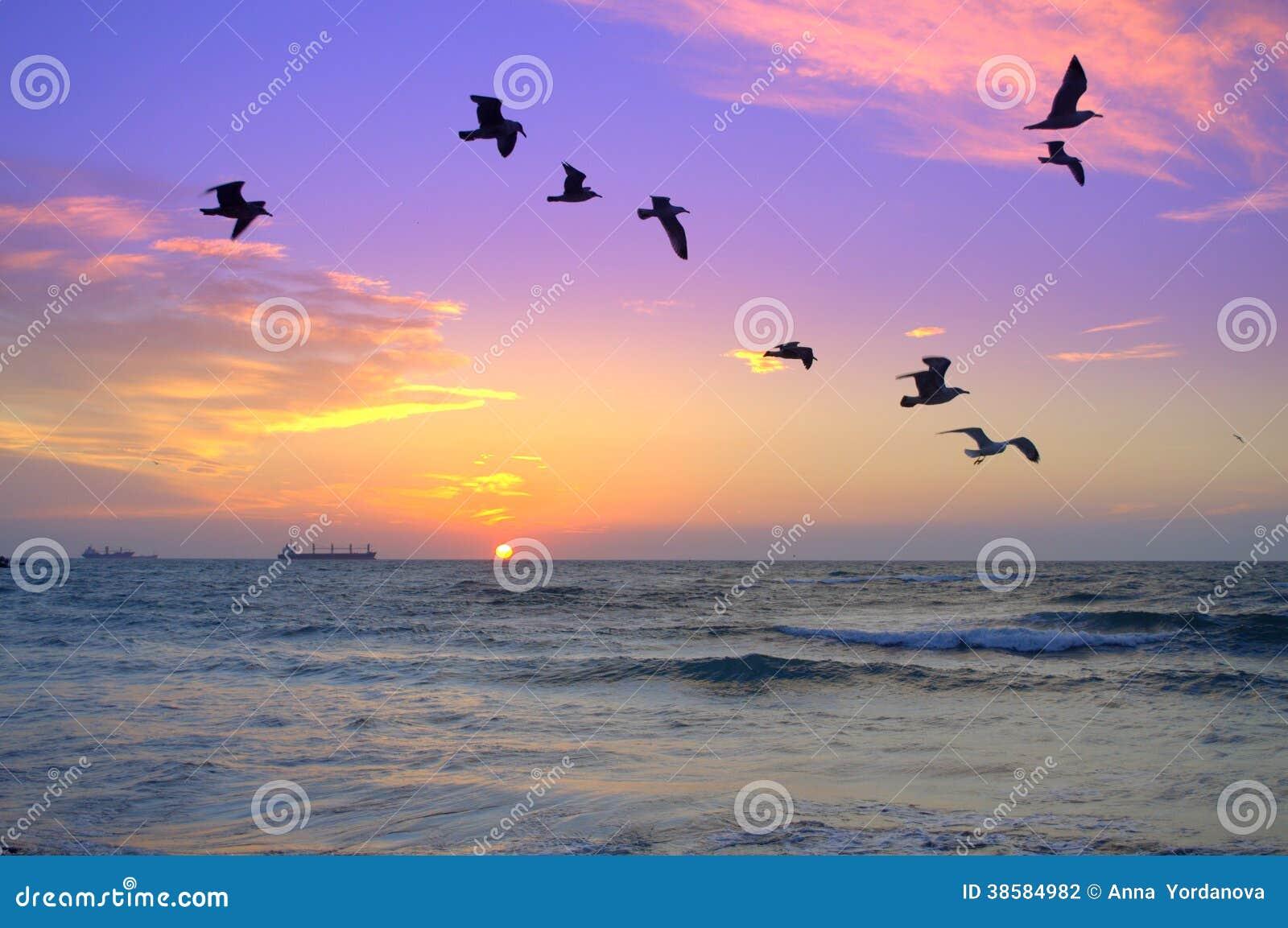 Flock av fåglar i bakgrunden av havssoluppgång