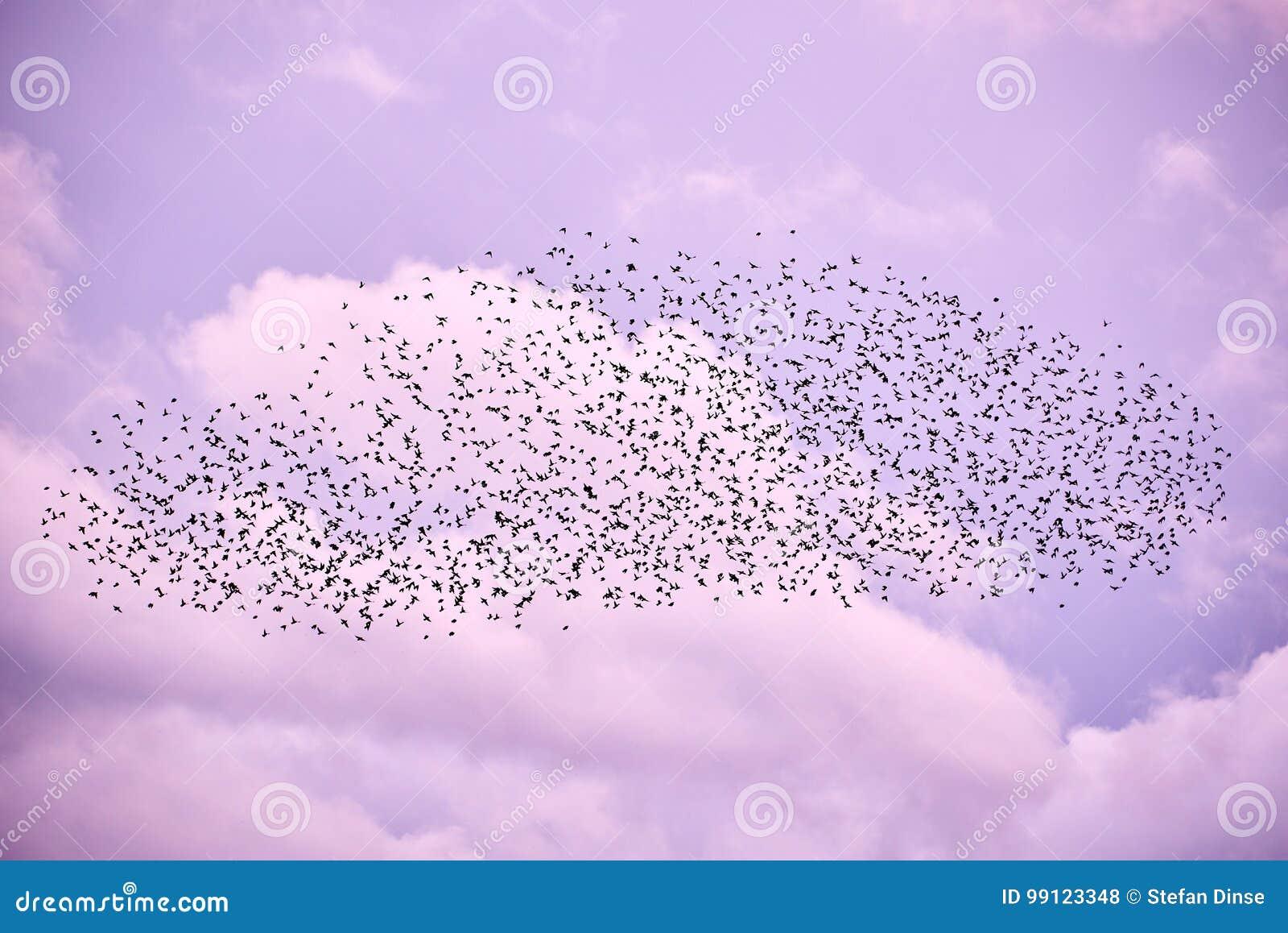 Flock av fåglar i lila himmel