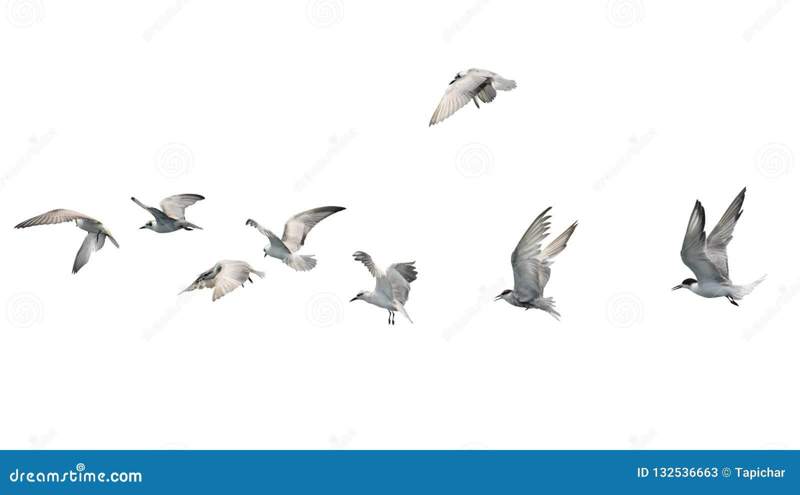 Flock av fåglar som flyger som isoleras på vit bakgrund