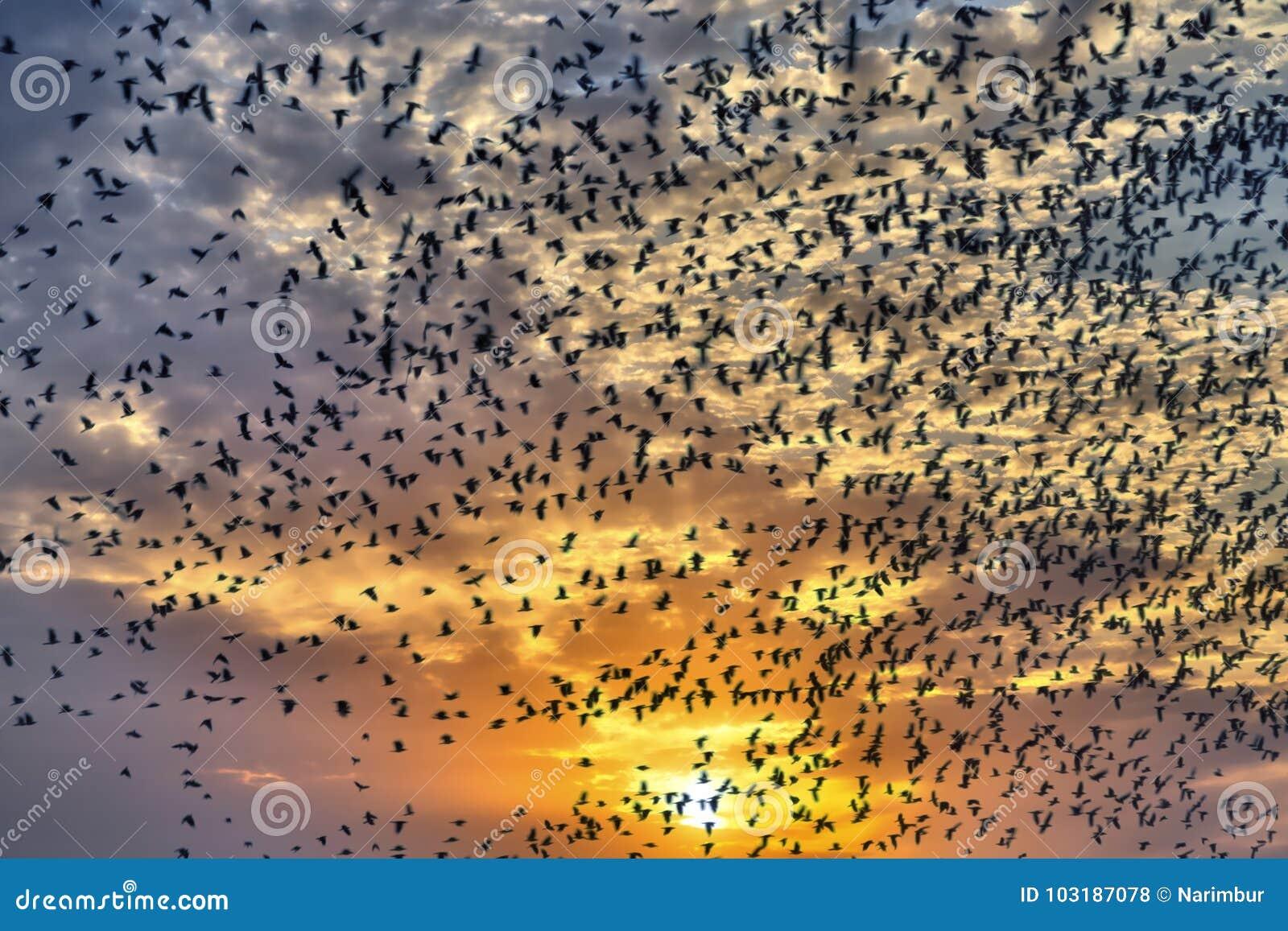 Flock av flygfåglar