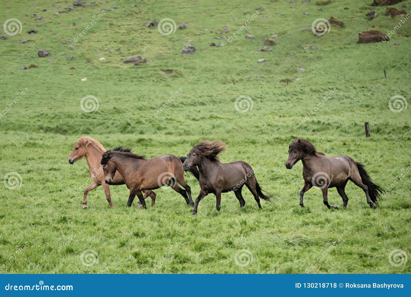 Flock av hästar