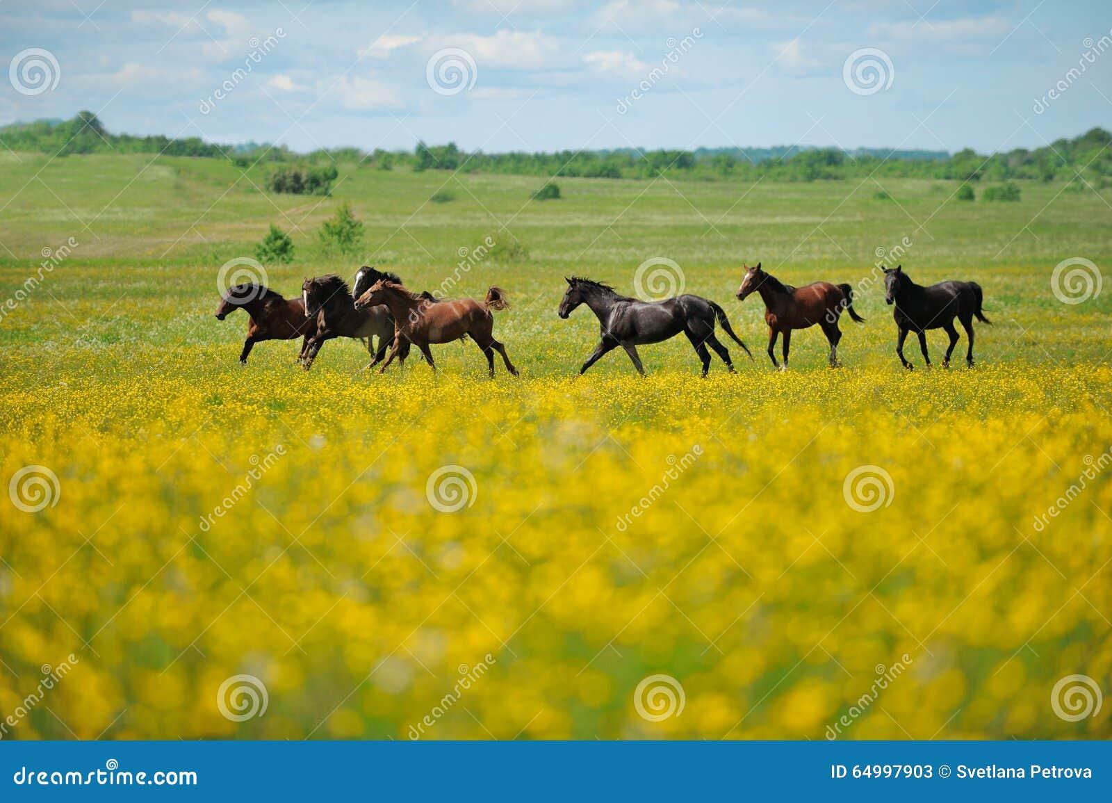 Flock av hästarna i fältet